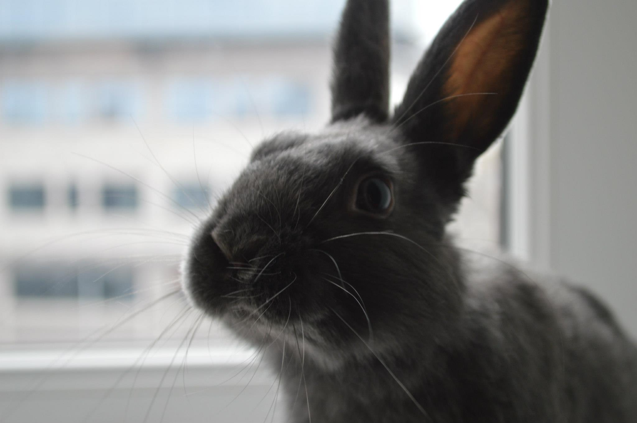 Bunny Has a Photoshoot at the Window 3