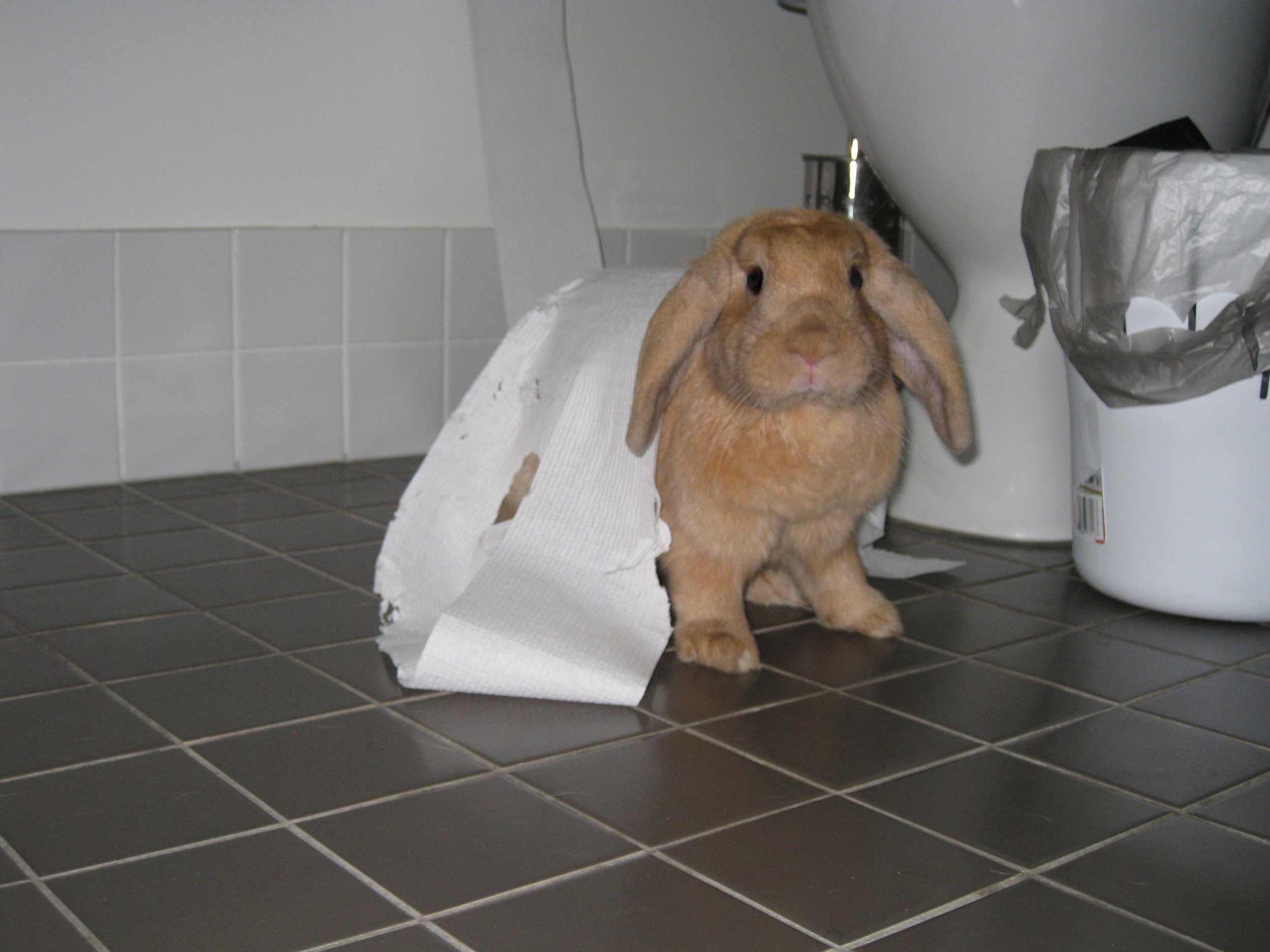 The Moment When Bunny Realizes She's Been Caught in the Act