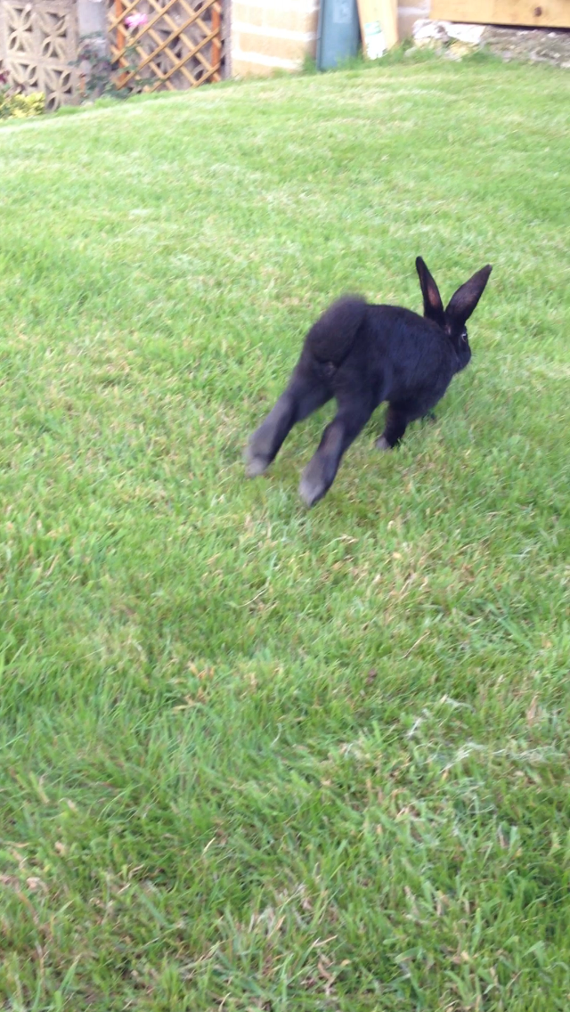Bunny Gets Some Encouragement from a Friend Before Hopping on the Grass for the First Time 3
