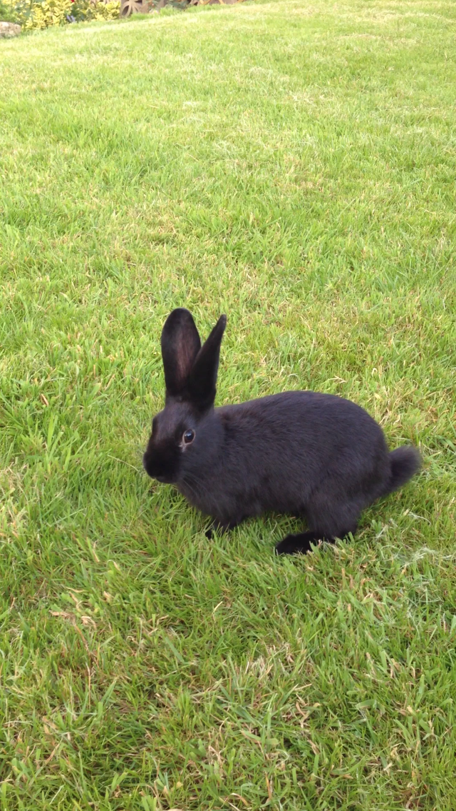 Bunny Gets Some Encouragement from a Friend Before Hopping on the Grass for the First Time 2