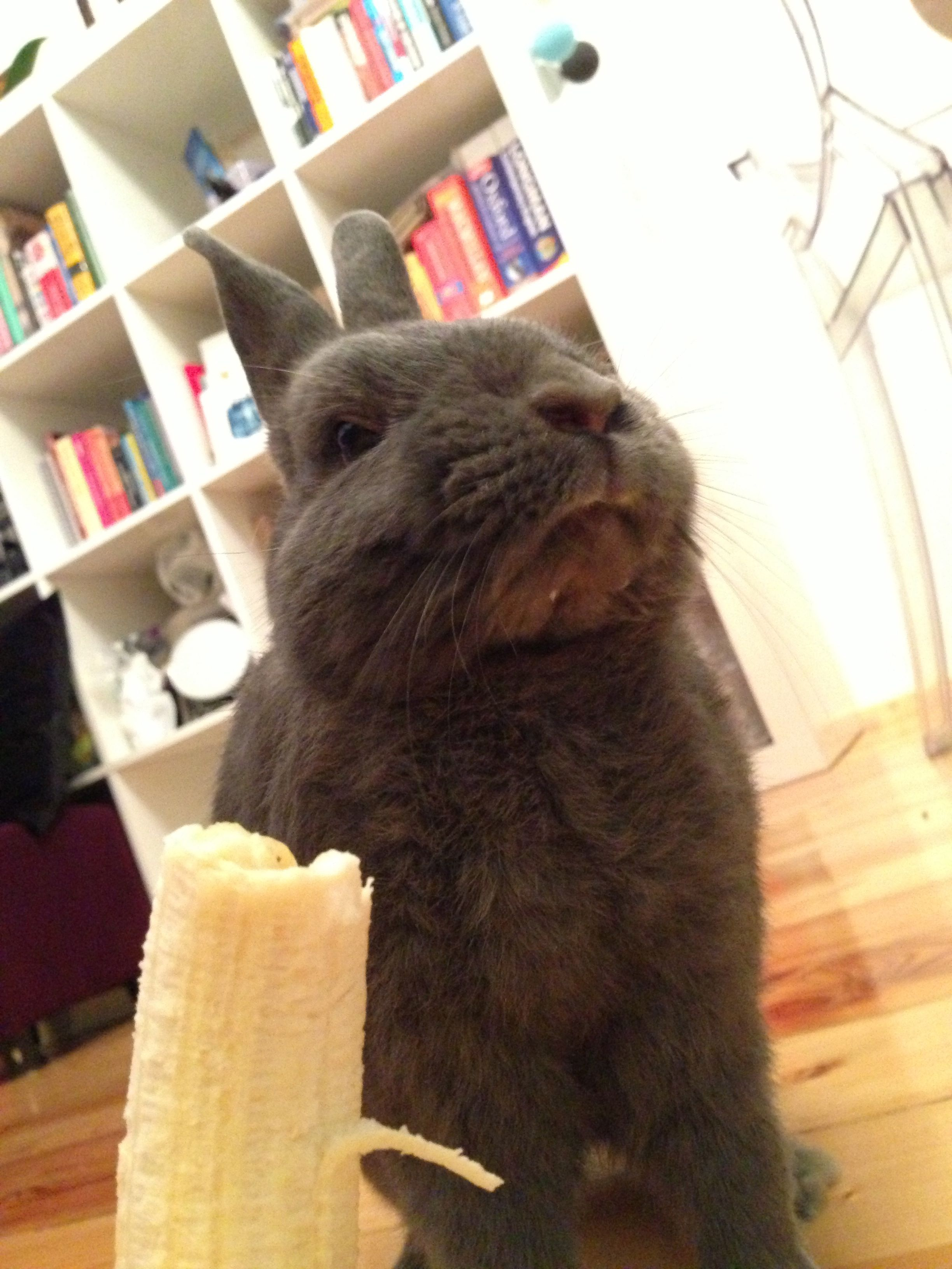 Bunny Appears to Disapprove of Banana, But the Tiny Bit on His Chin Tells a Different Story!