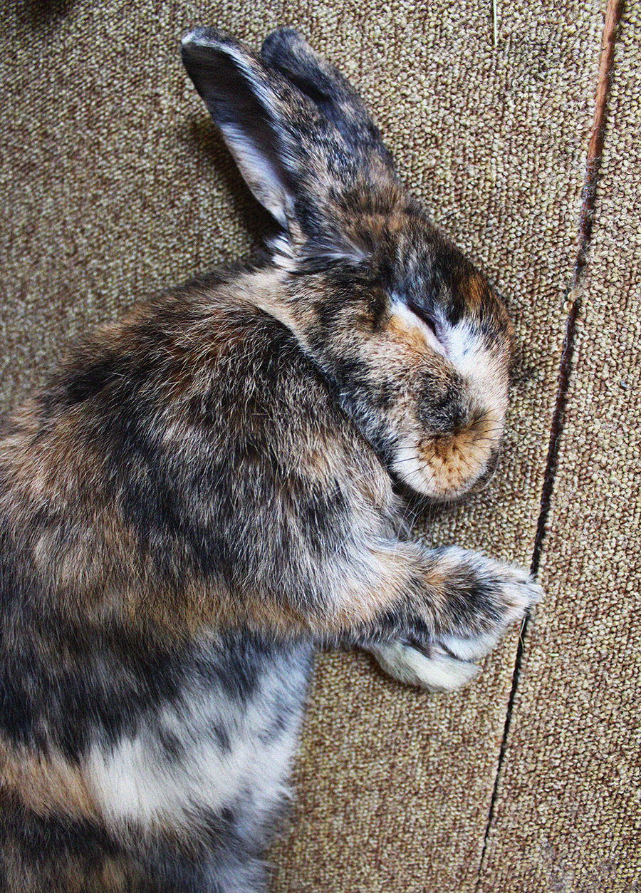 It Doesn't Take Much More than a Flop to Lull a Bunny to Sleep 2