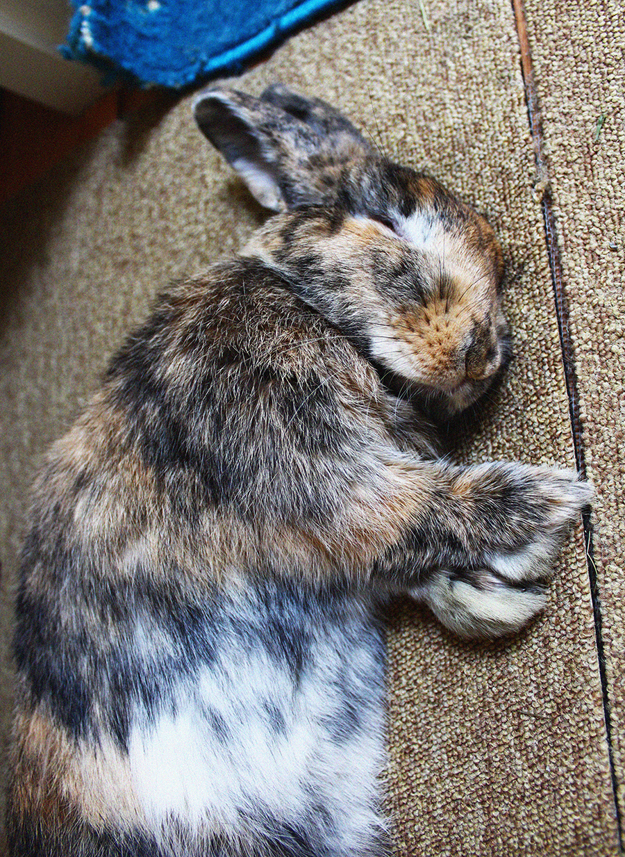 It Doesn't Take Much More than a Flop to Lull a Bunny to Sleep 1