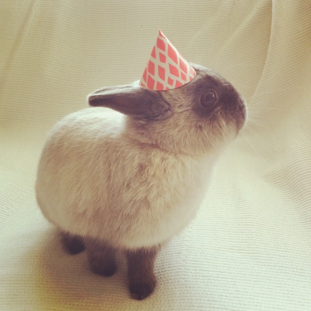 Bunny Wears a Tiny Paper Hat for His Birthday