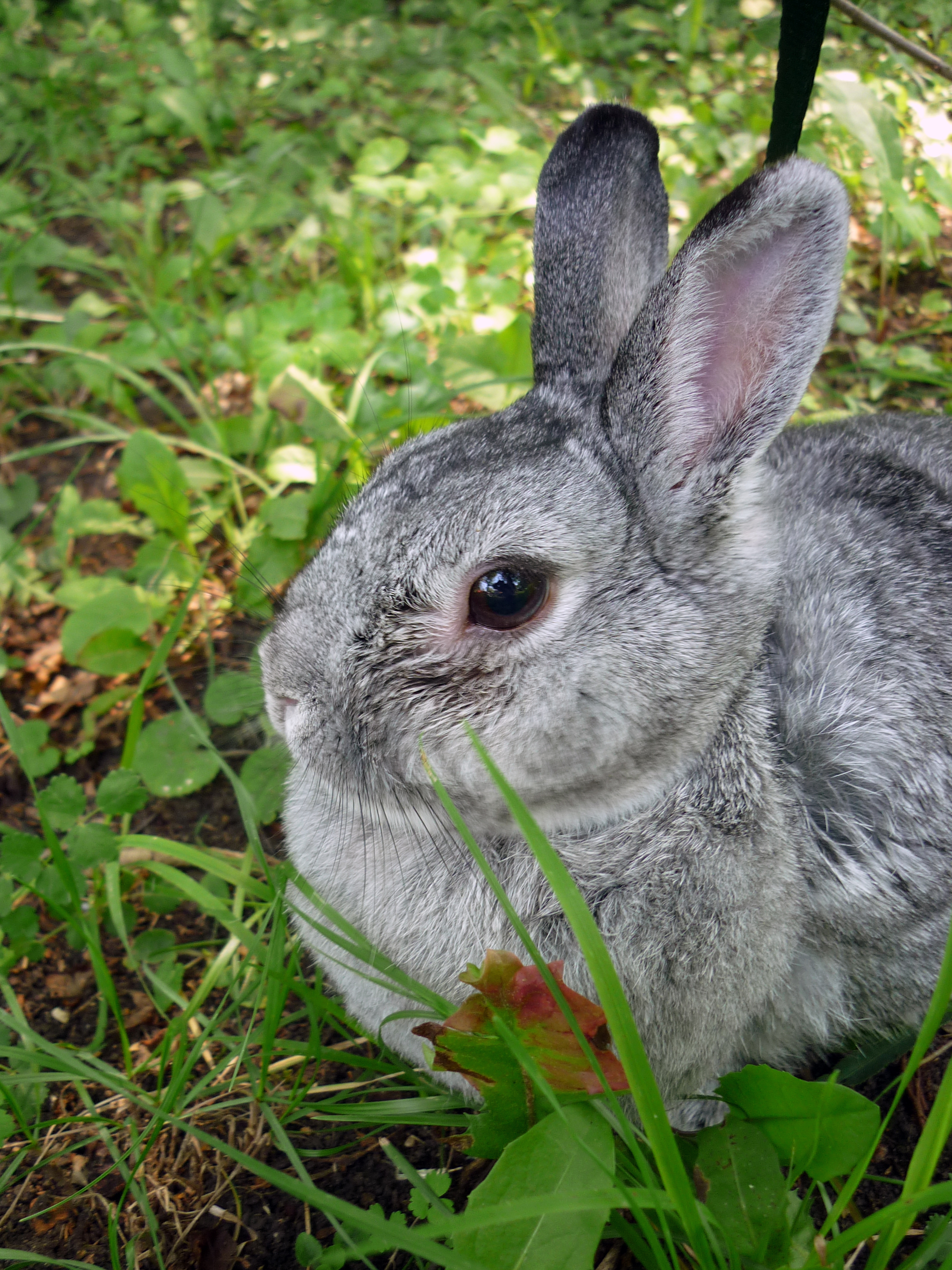 Bunny Settles into Relaxation Mode Outside in Peaceful Green Surroundings