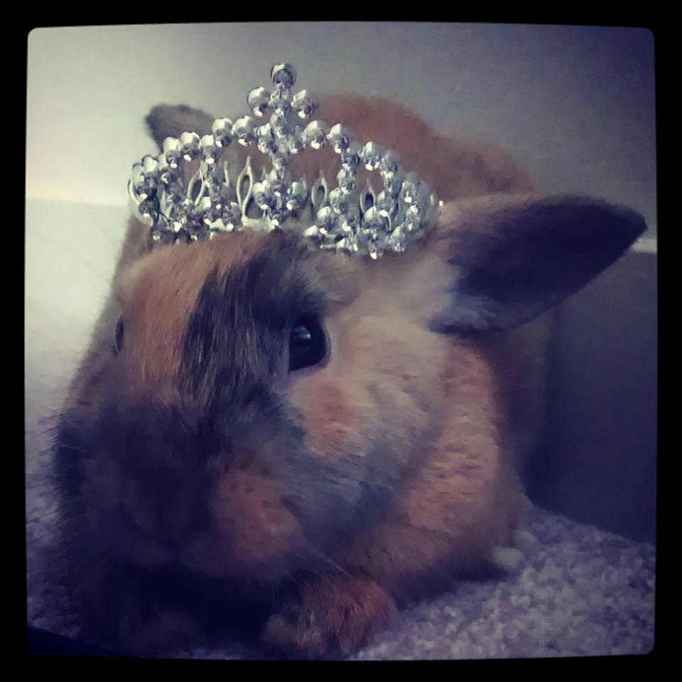 Princess Bunny Grants You an Audience - If You Brought Her Greens, That Is
