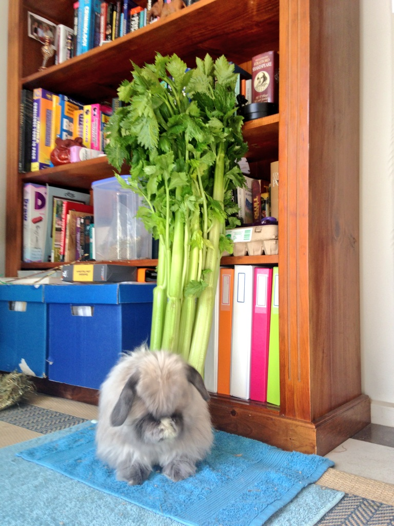 Bunny Hides His Face and Counts to Three in the Hopes a Giant Celery Stalk Will Appear