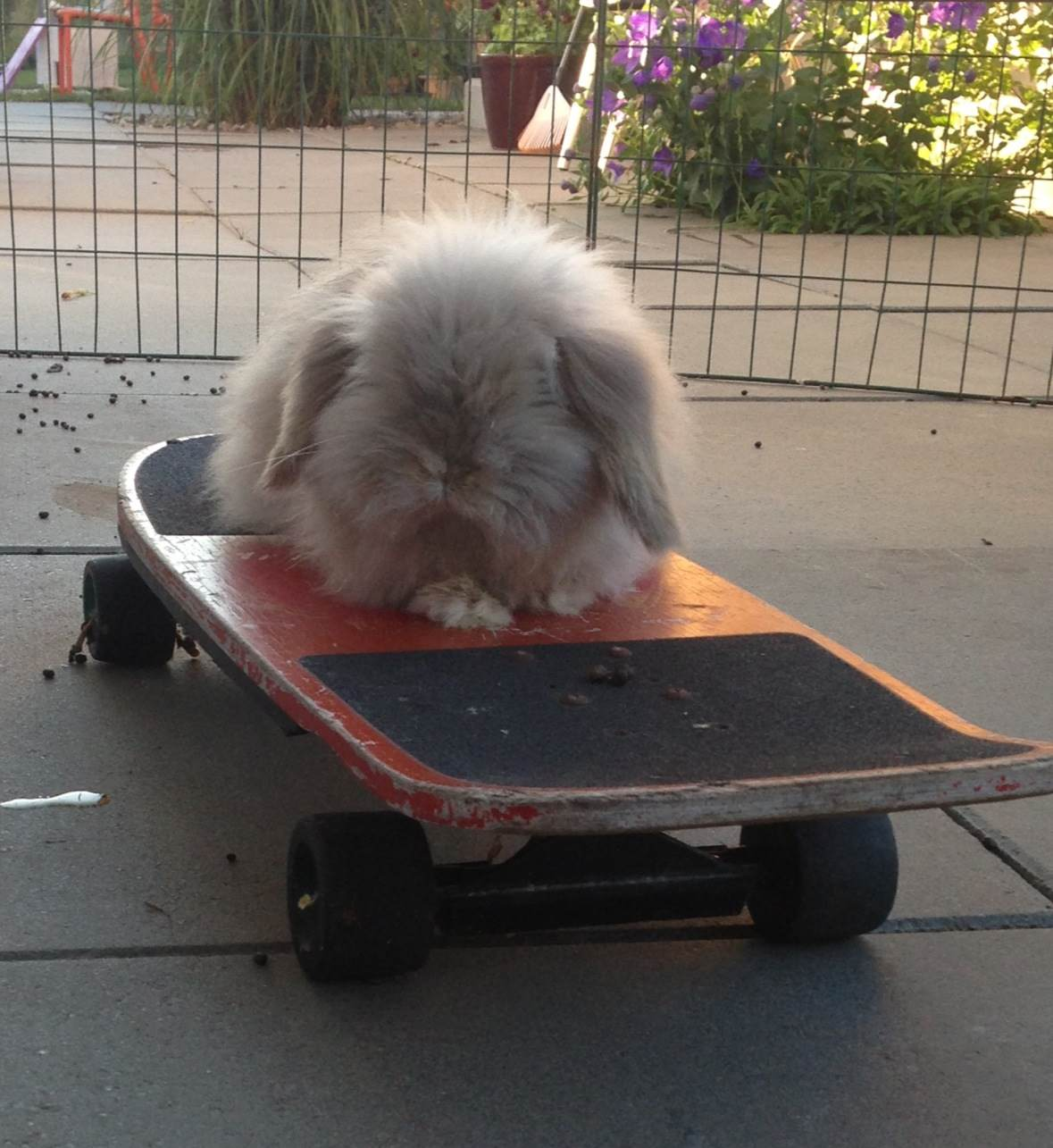 Could Bunny Be the Next Tony Hawk?