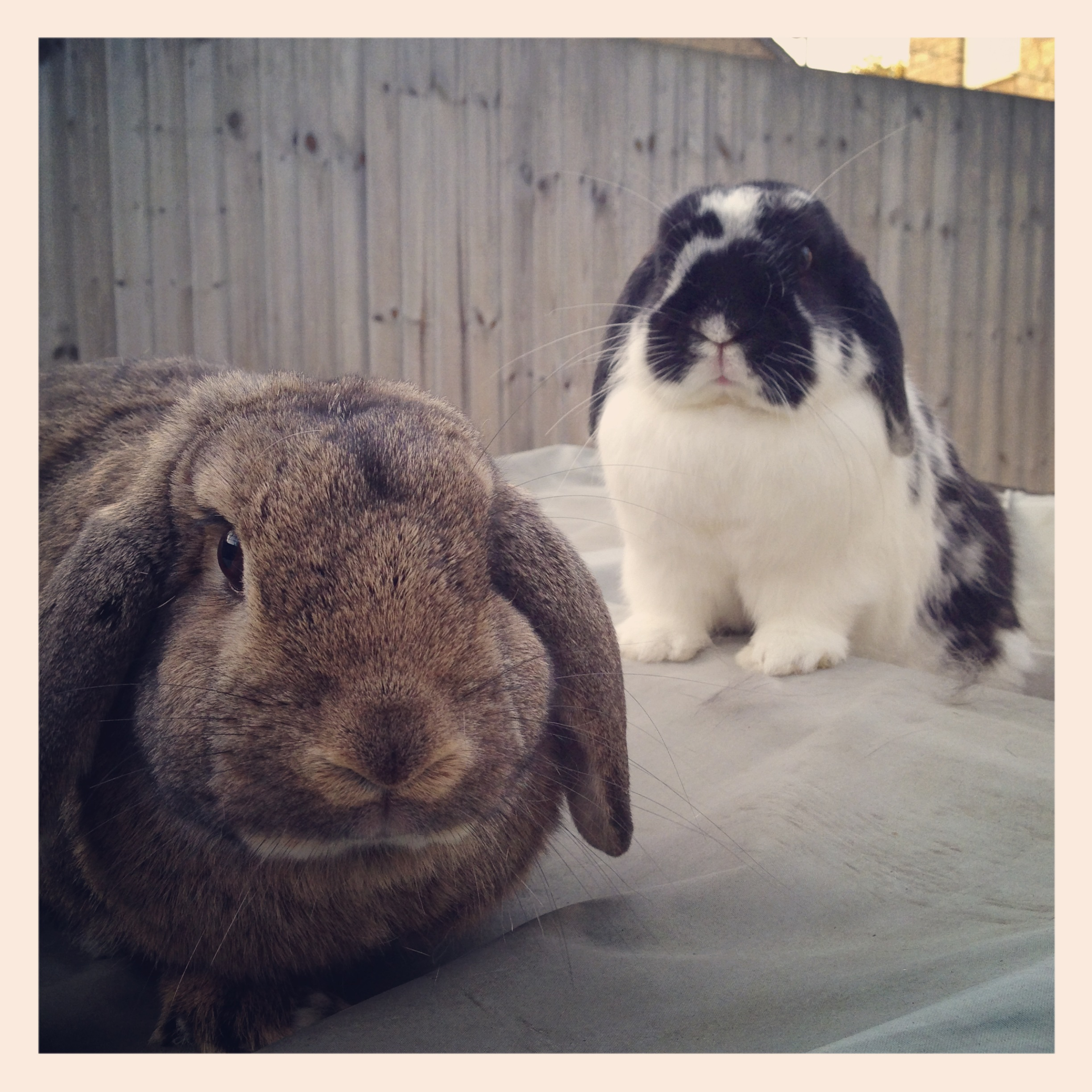 Looks Like You're in the Wrong Neighborhood, Human. Now Give Us All Your Carrots!