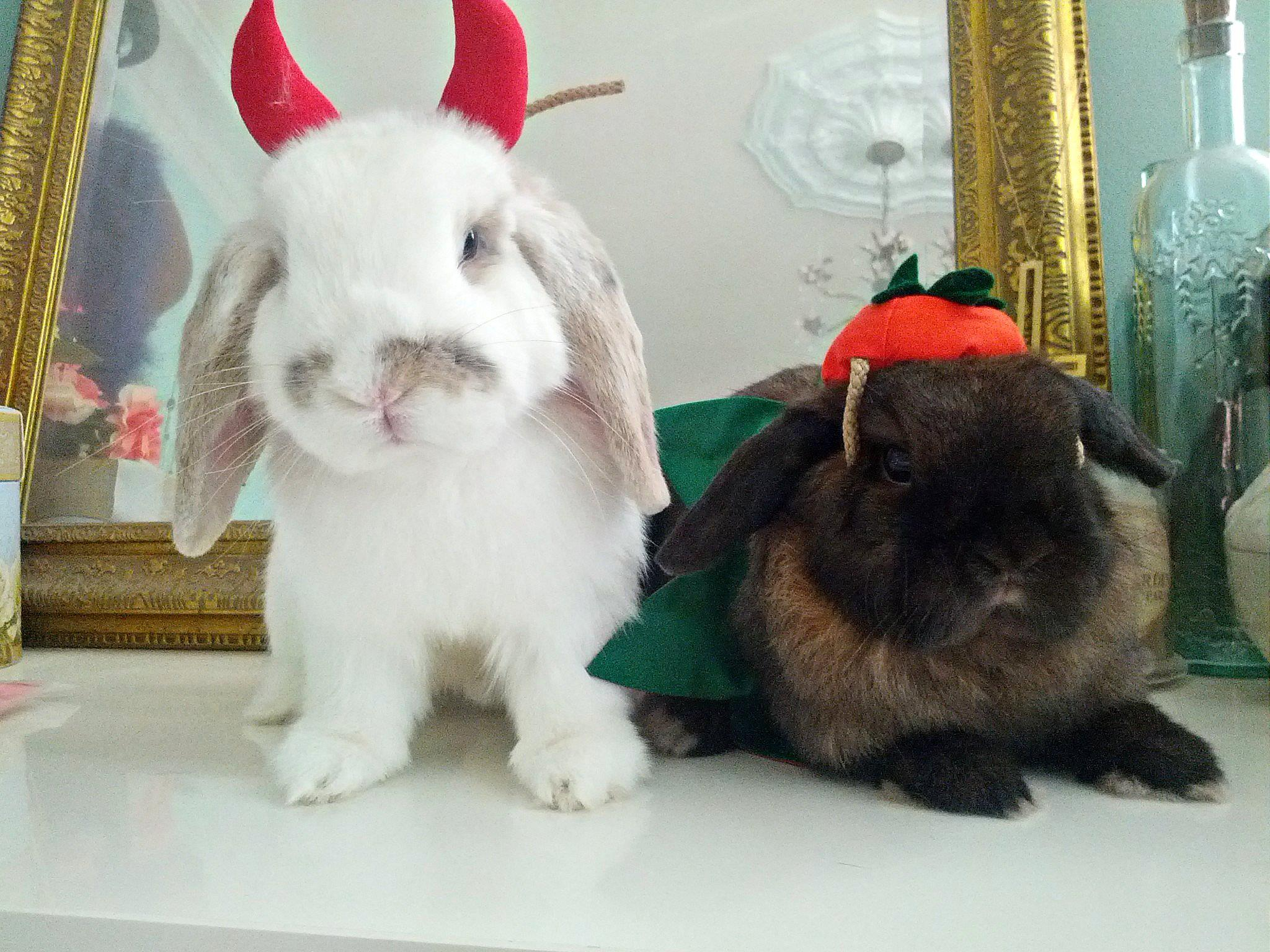 The Daily Bunny's Halloween 2013 Mega-Post! 1