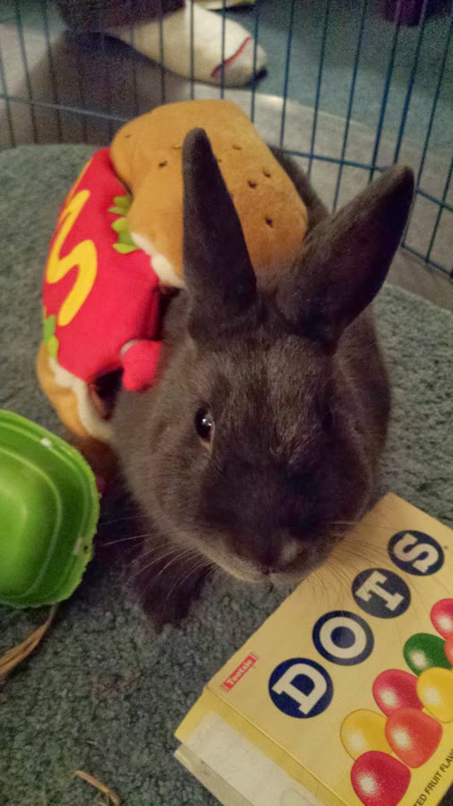 The Daily Bunny's Halloween 2013 Mega-Post! 3