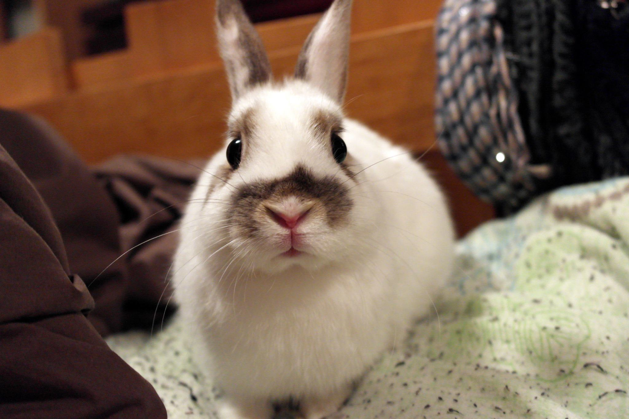 It's a Bunny vs. Human Staredown - First One to Blink Has to Fetch Greens for the Winner