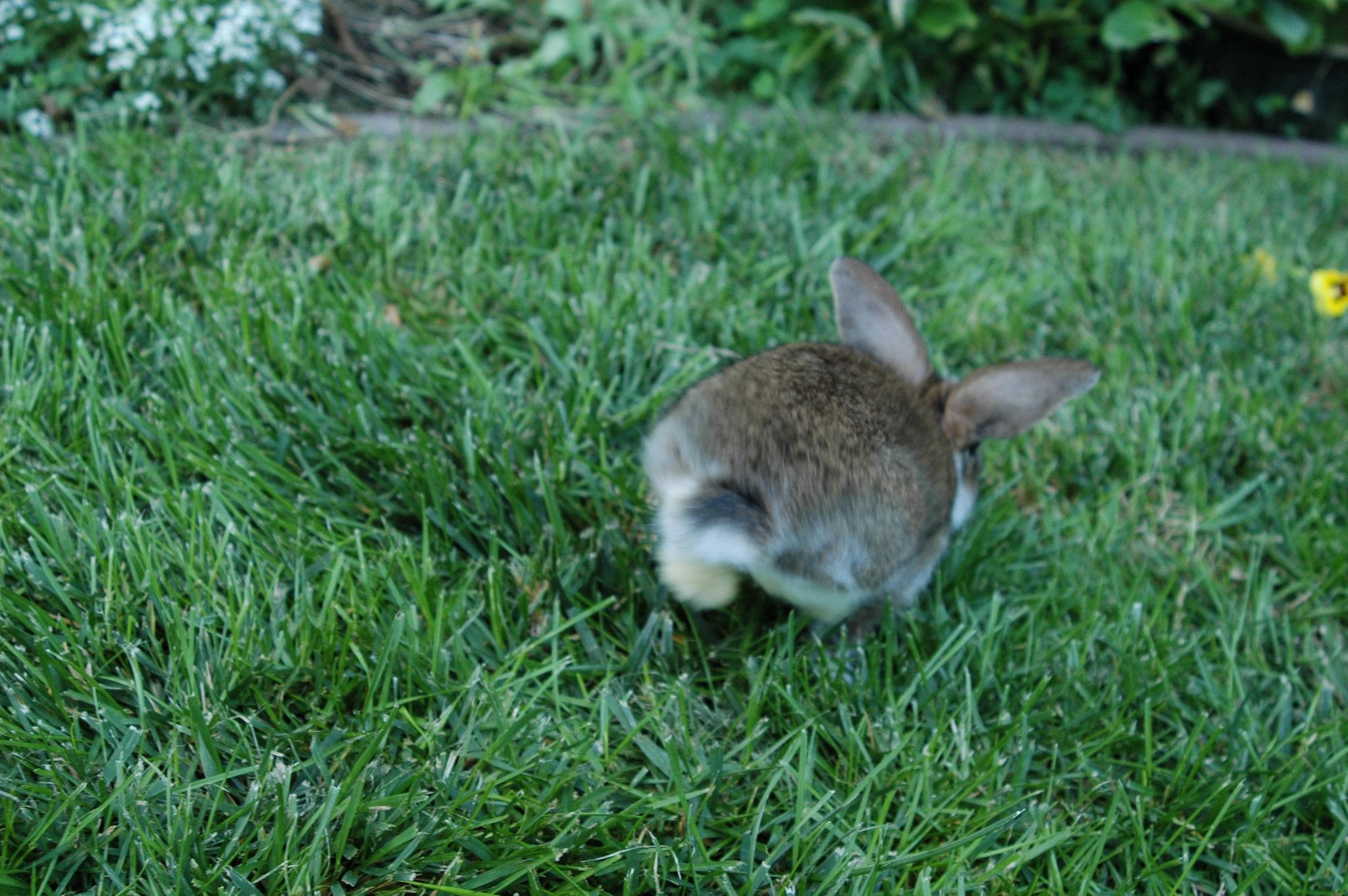 Action Shot of Bunny Landing a Big Hop