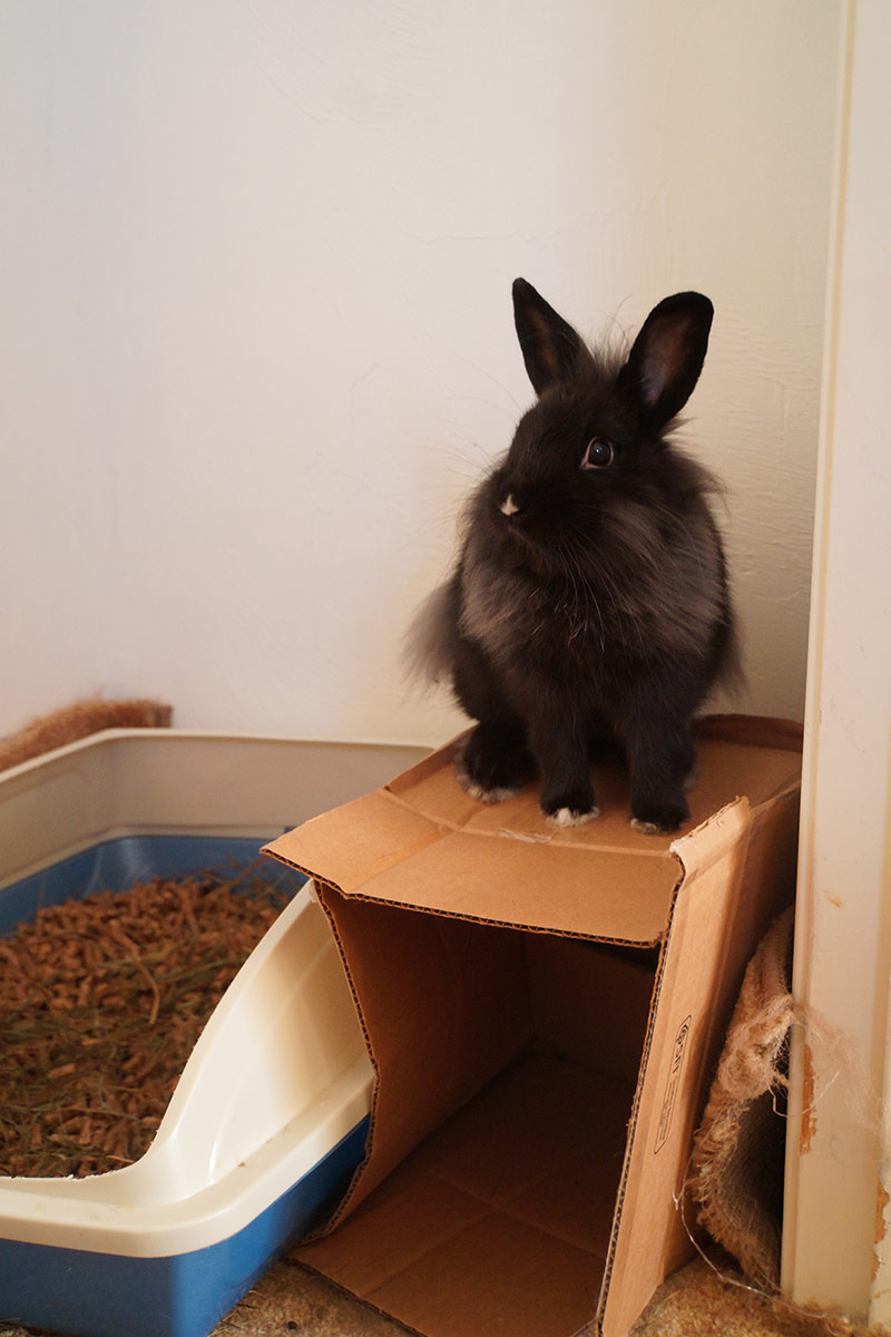 Bunny, King of the Box, Rules Over All He Surveys