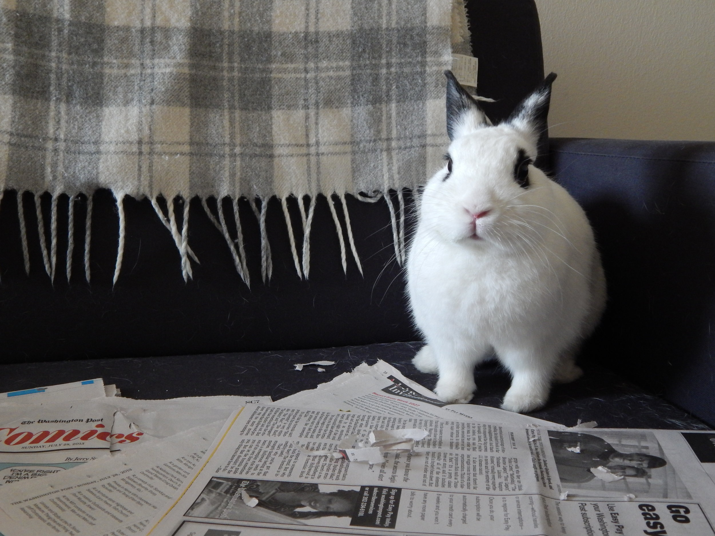Oh, You Wanted to Read the Paper Before I Shred It? Hurry Up - The Clock Is Ticking!