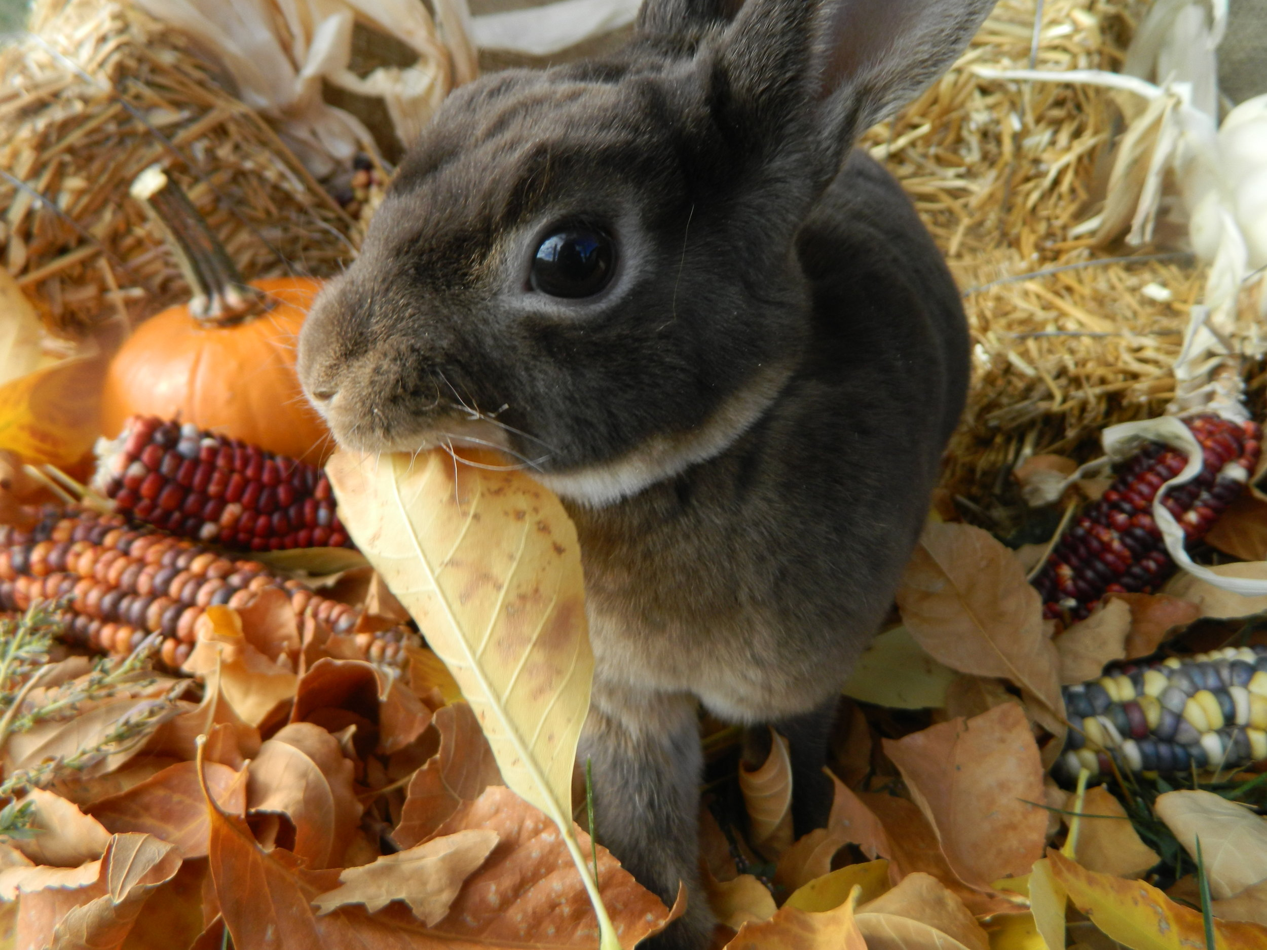 Bunny Gets in on the Fall Spirit 3