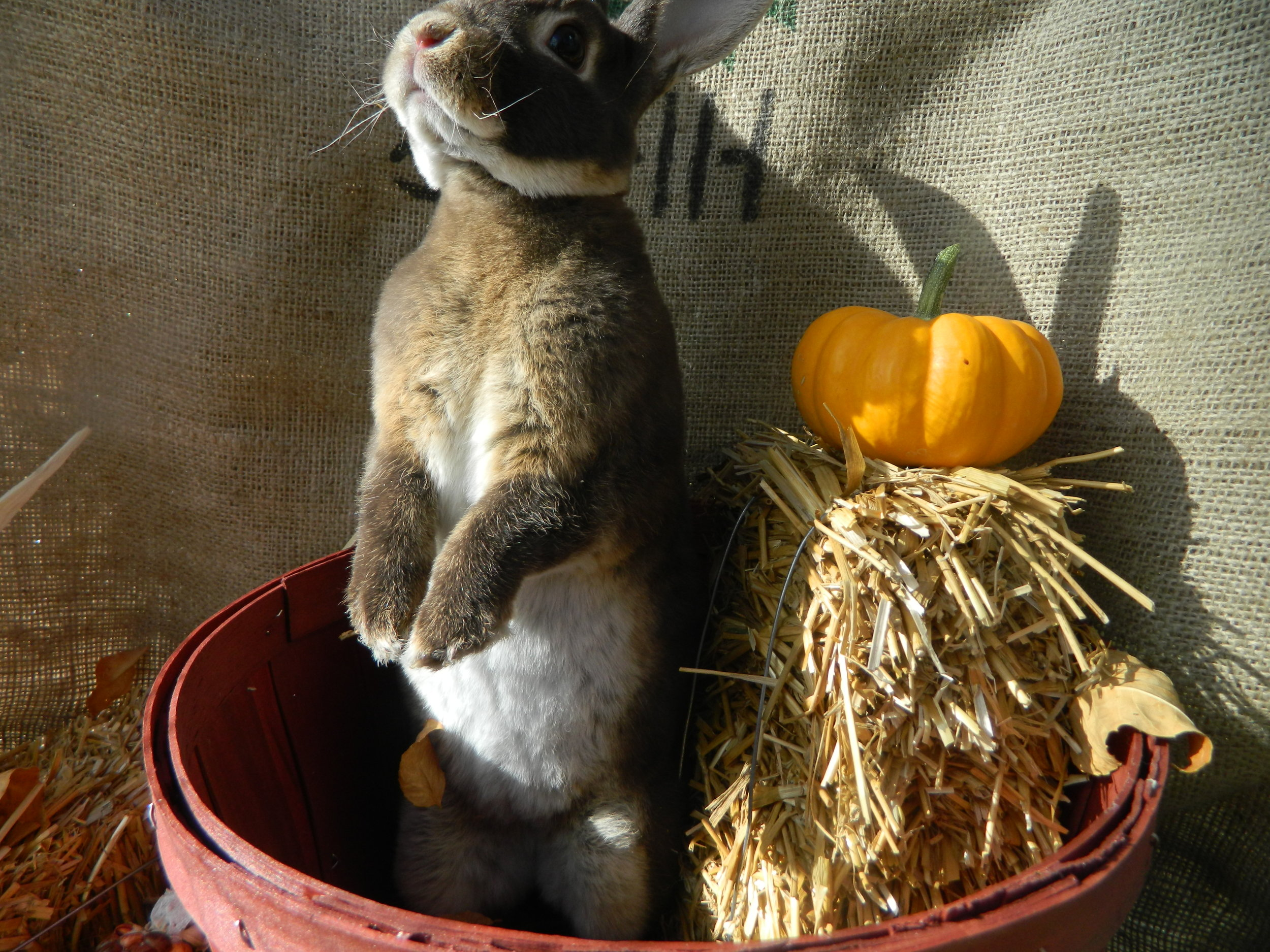 Bunny Gets in on the Fall Spirit 1