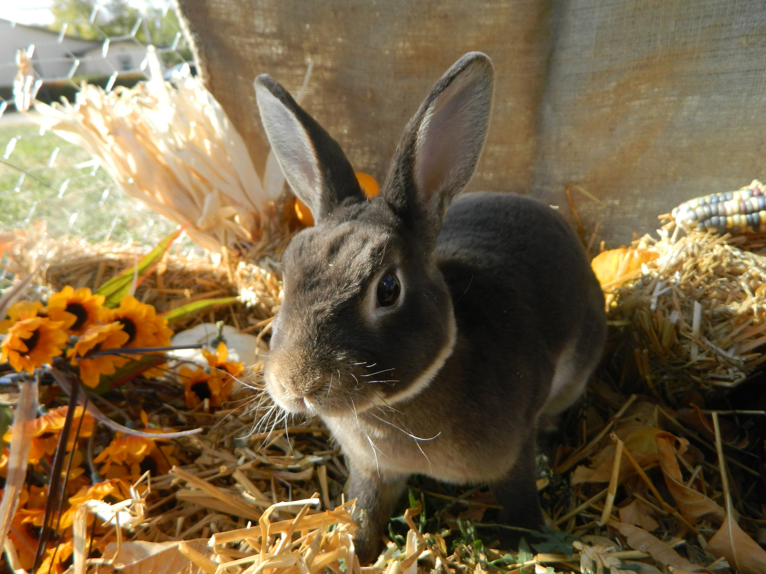 Bunny Gets in on the Fall Spirit 4