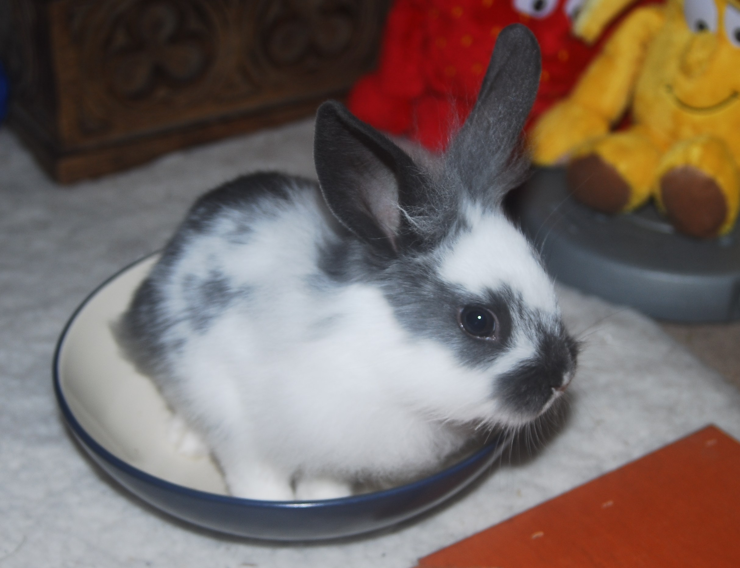 Bunny Is So Excited for Veggies He Hopped in the Salad Bowl