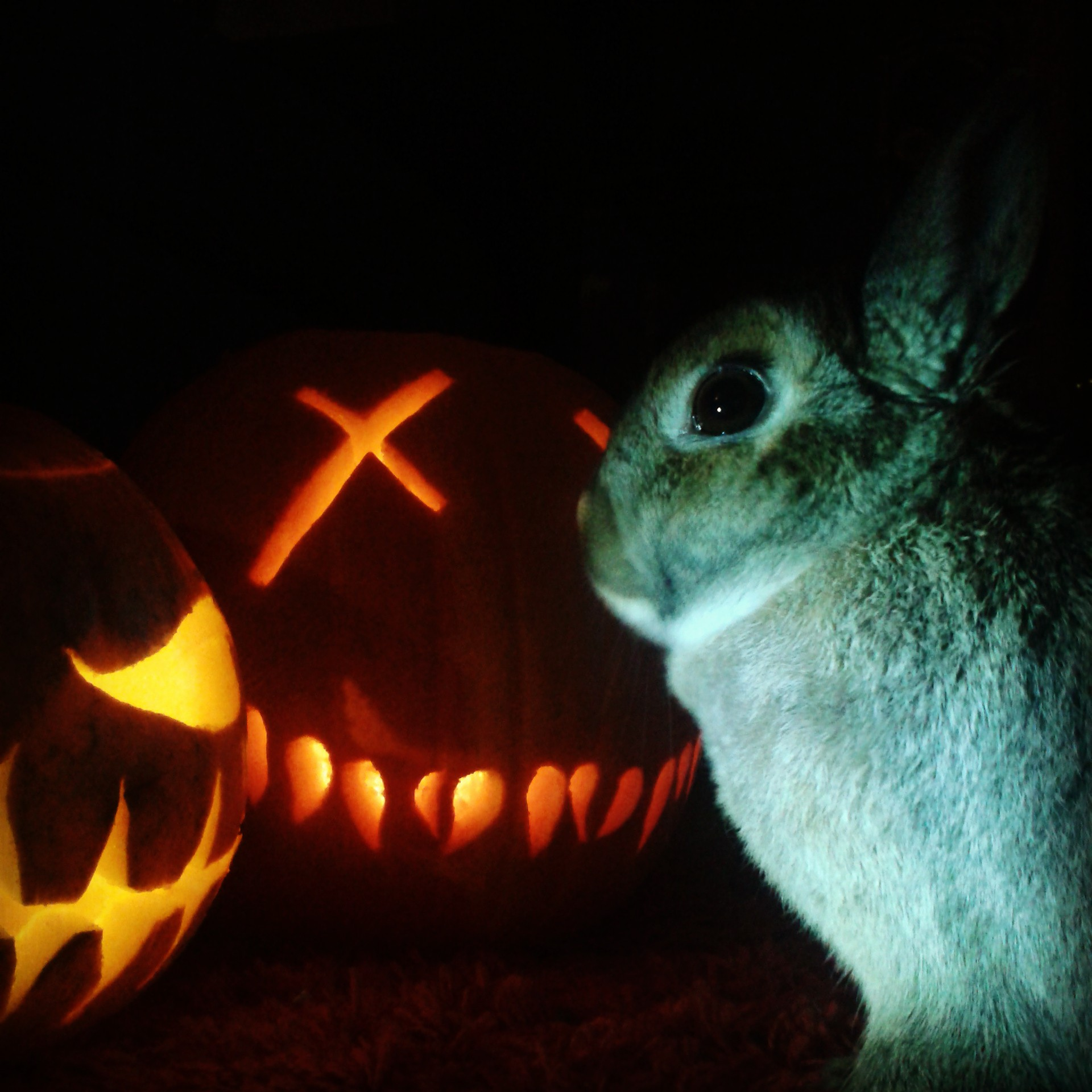 The Daily Bunny's Halloween 2013 Mega-Post! 8
