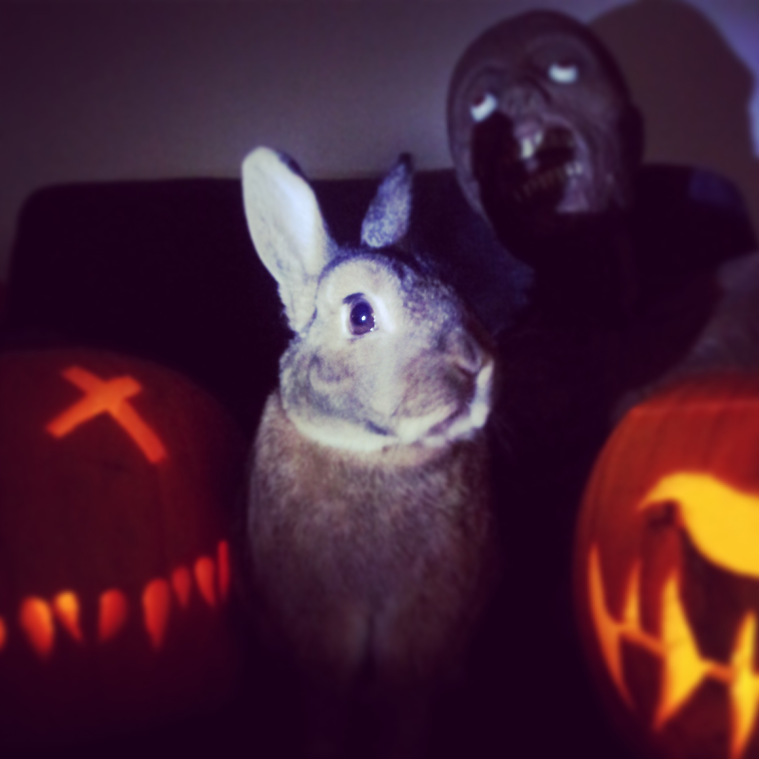 The Daily Bunny's Halloween 2013 Mega-Post! 9