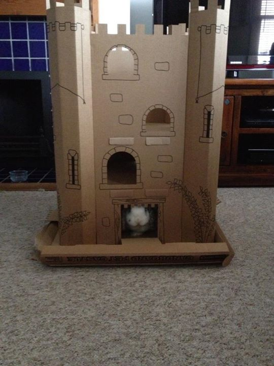 Who Approaches Bunny's Castle?
