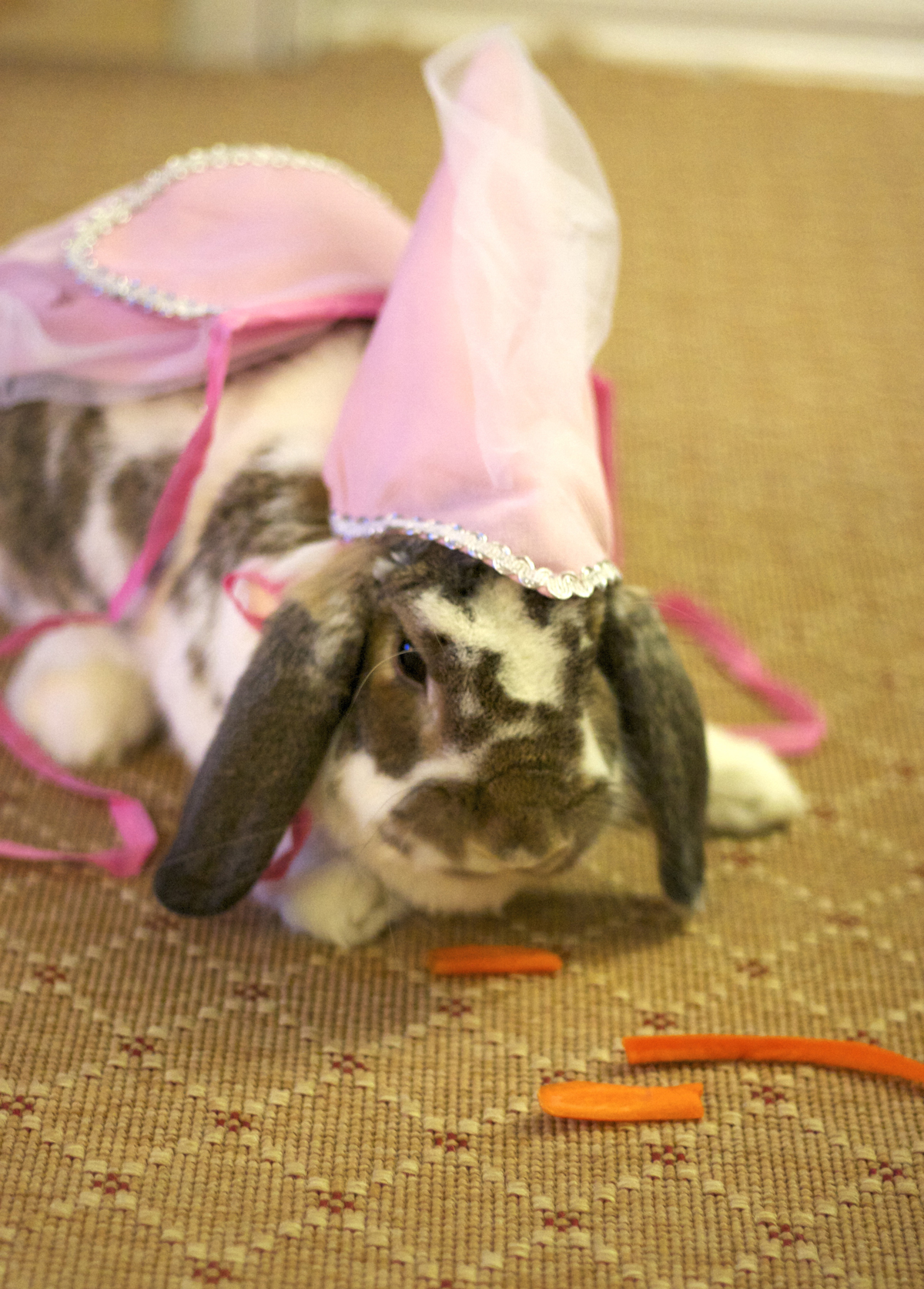 The Daily Bunny's Halloween 2013 Mega-Post! 14