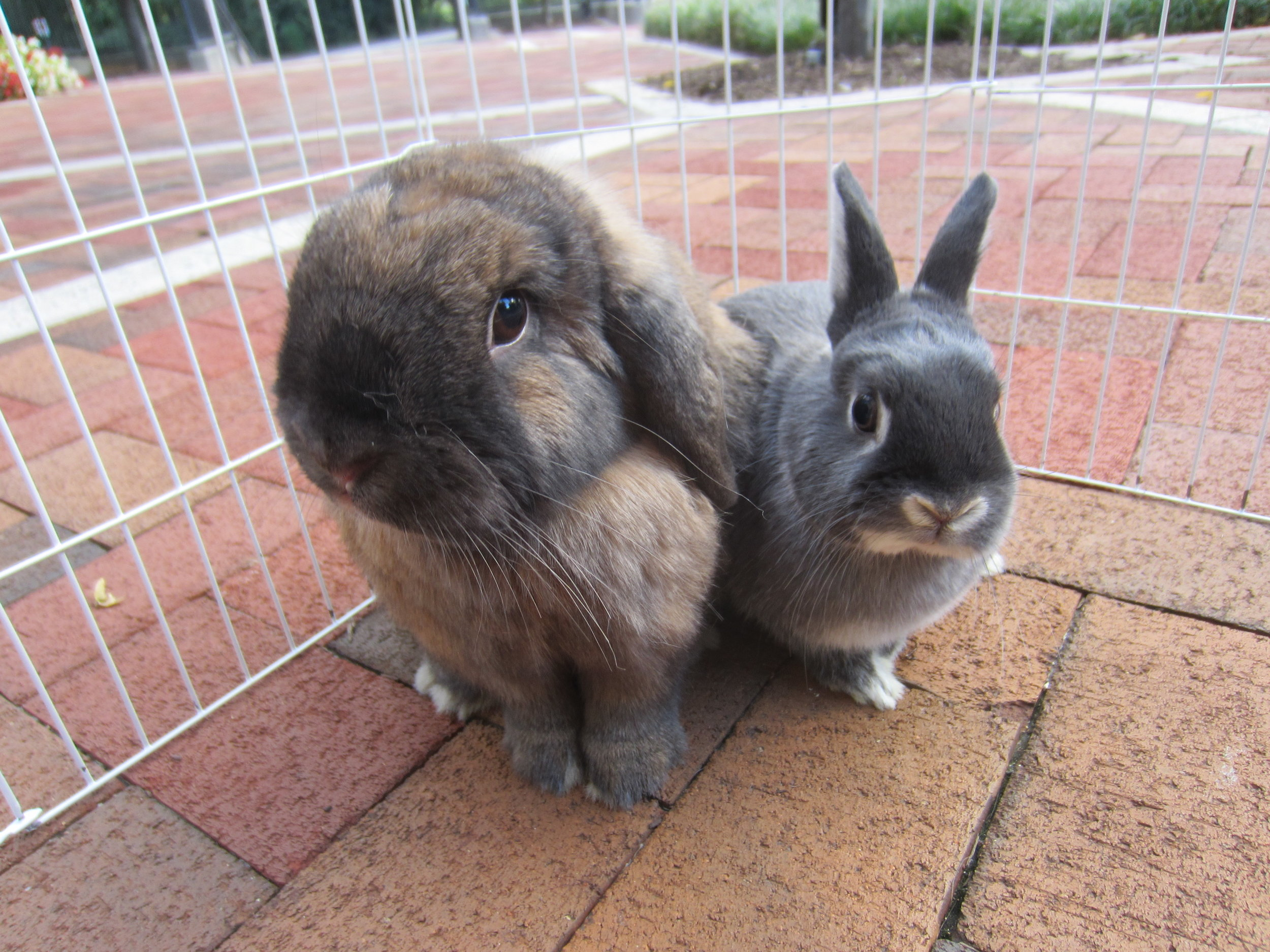 Bunnies Go Out on the Patio to Sniff the Fresh Fall Air 1