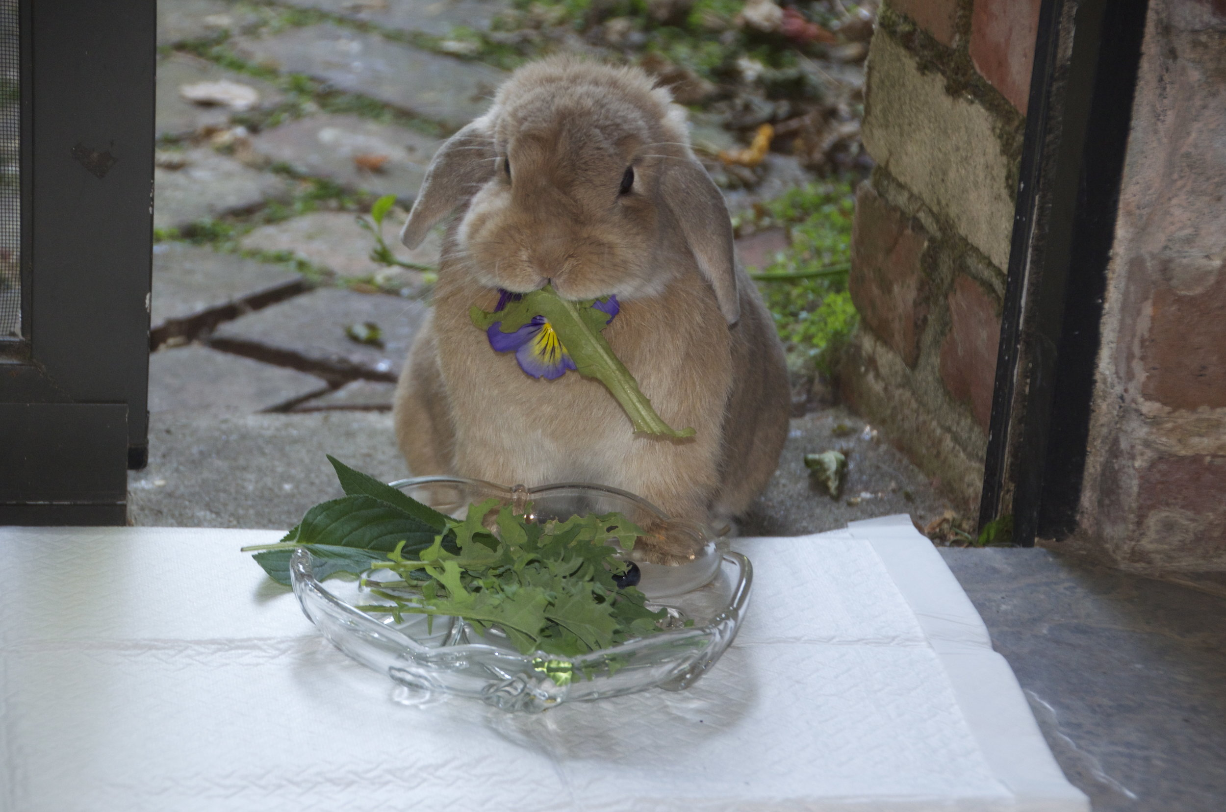 Bunny Enjoys a Nice Salad Al Fresco