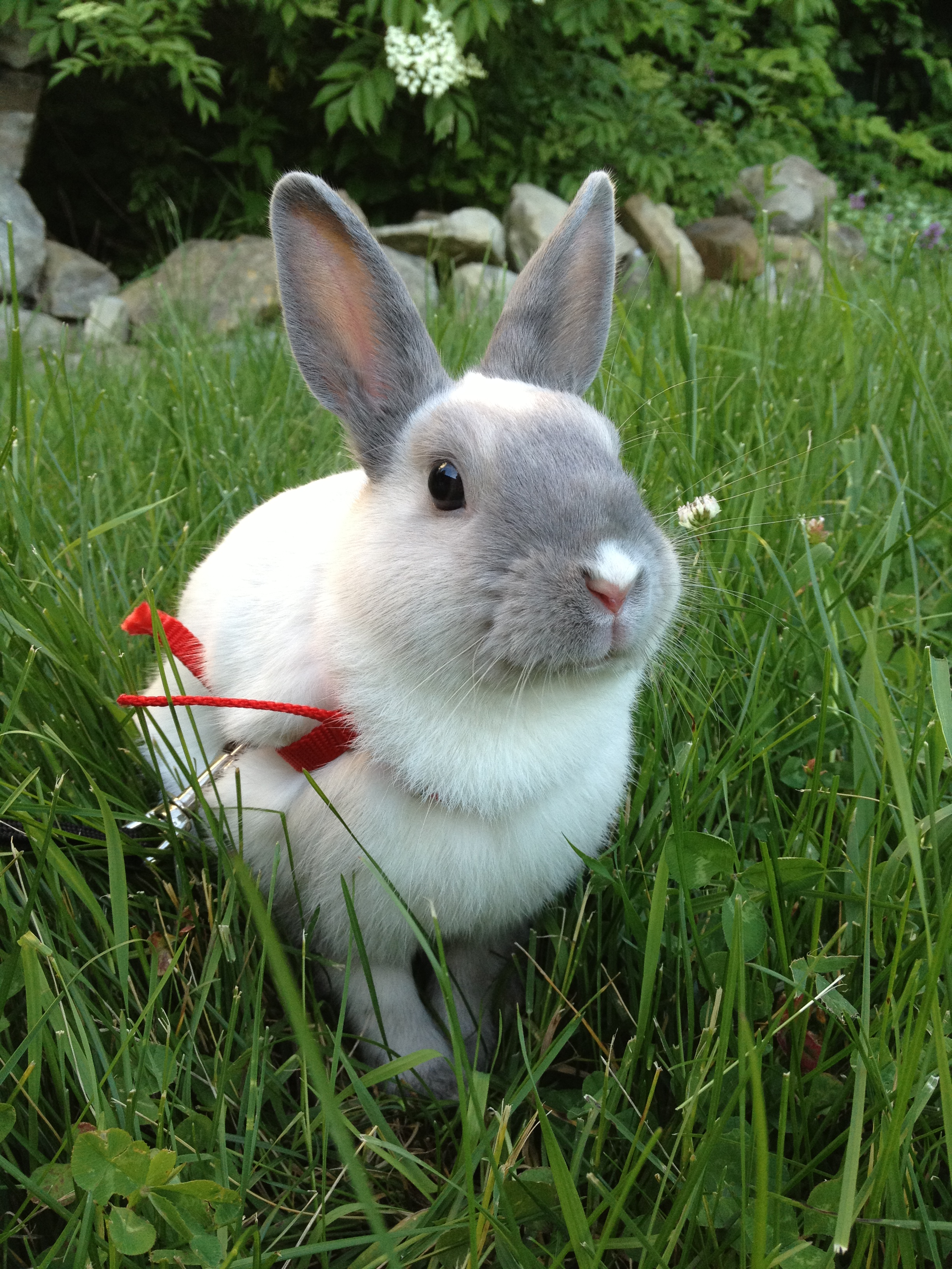 Photos Illustrating Two Sides of Bunny: One in Which He Sits Sweetly, Another in Which Grass Sticks Out of His Mouth While Eating 1