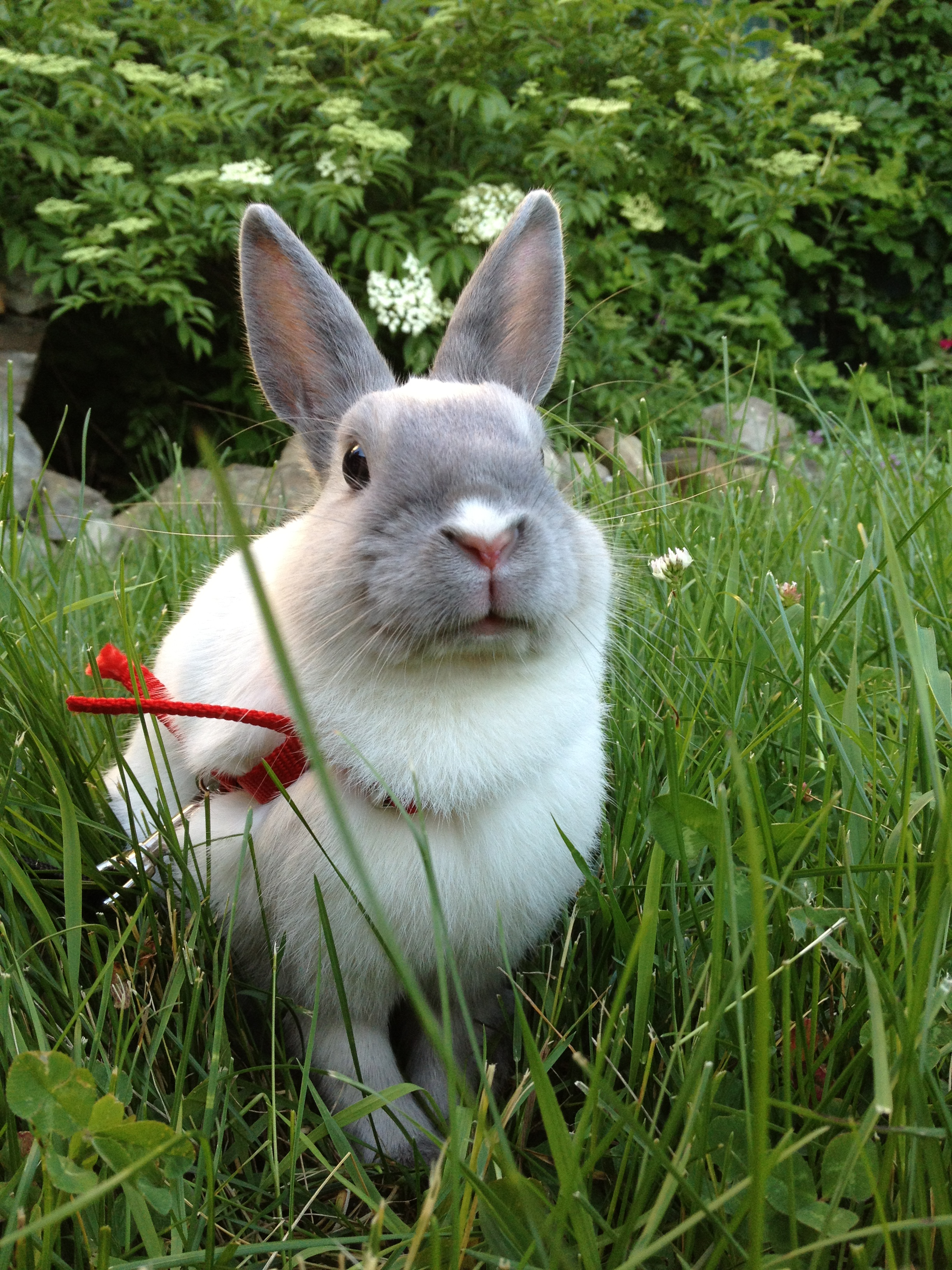 Photos Illustrating Two Sides of Bunny: One in Which He Sits Sweetly, Another in Which Grass Sticks Out of His Mouth While Eating 2