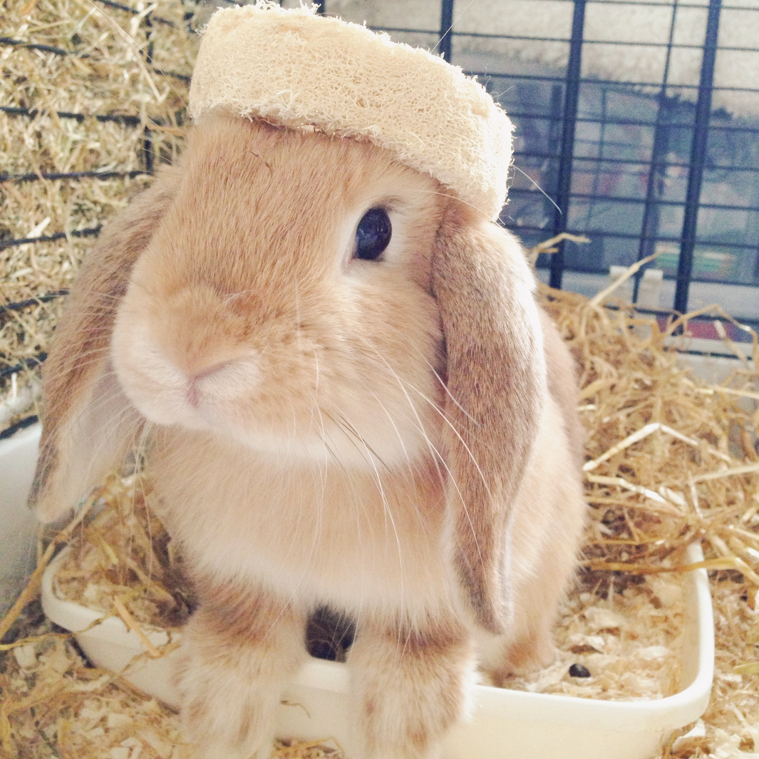 Bunny Wears His Toy as a Crown