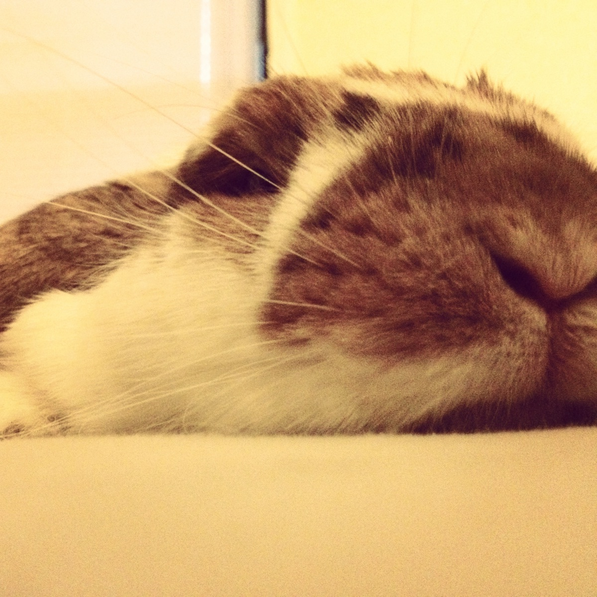Bunny Has Achieved Ultimate Melted Status