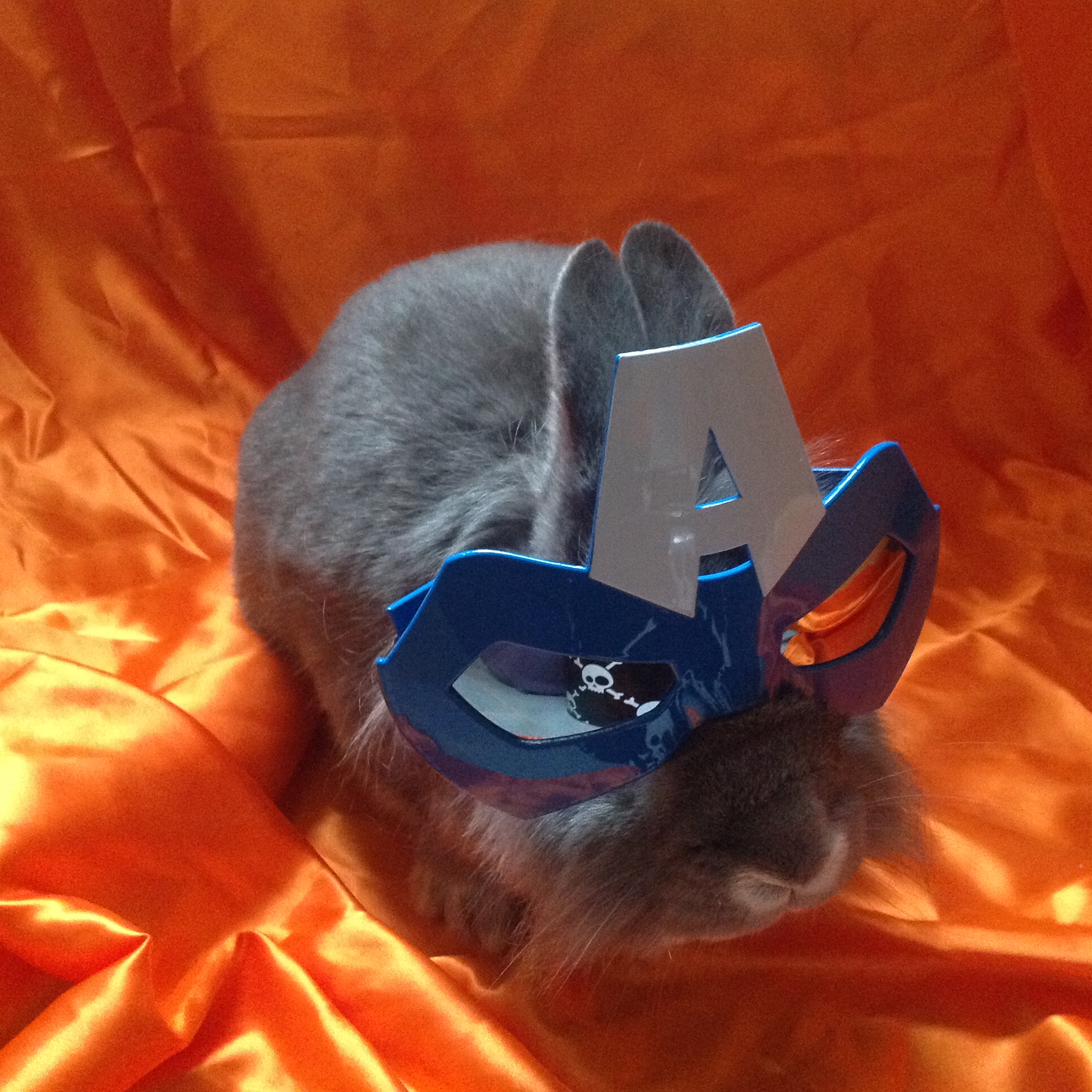 The Daily Bunny's Halloween 2013 Mega-Post! 15