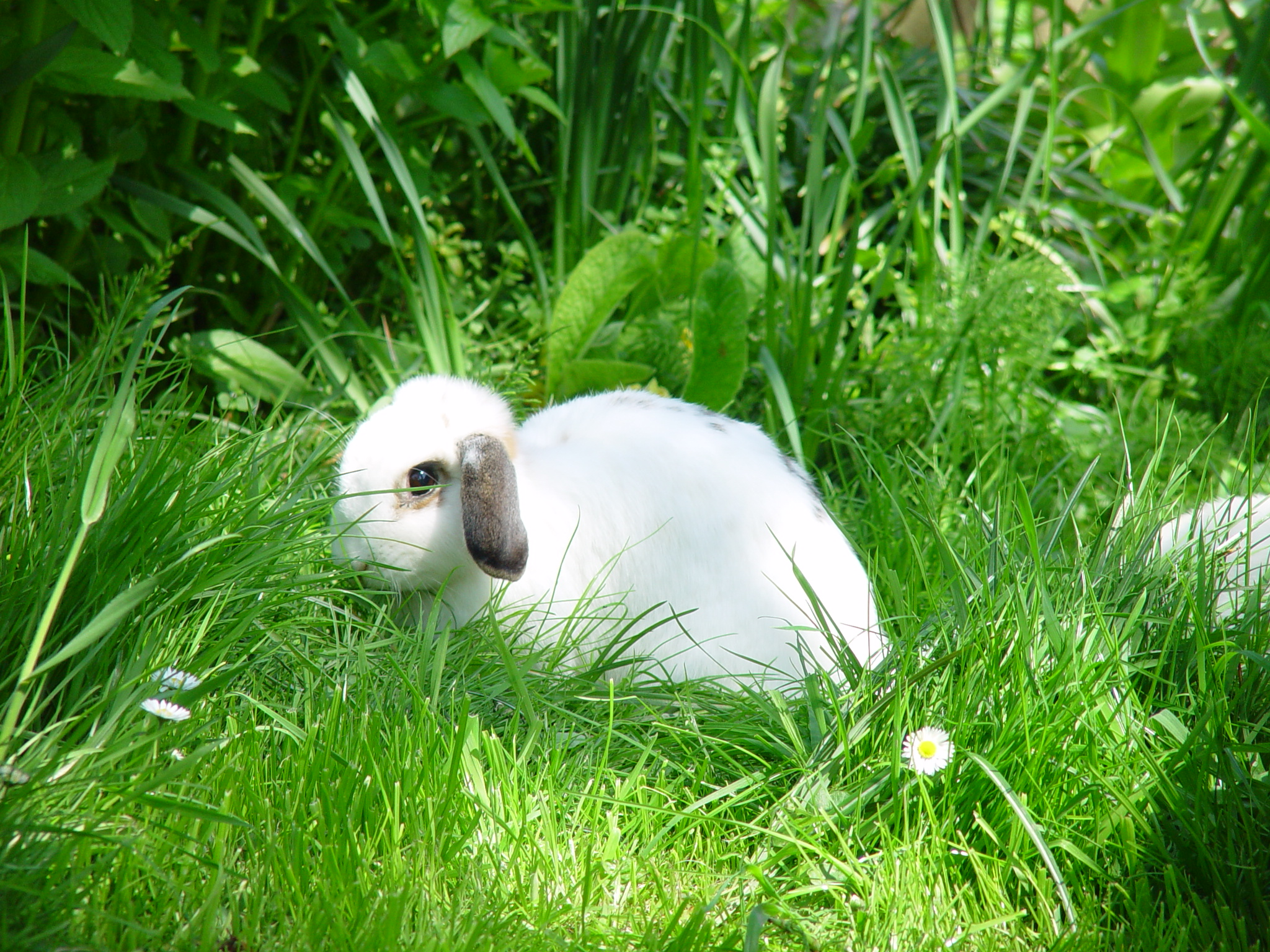 Adventurous Bunnies Explore the Lawn and Tall Grasses 2