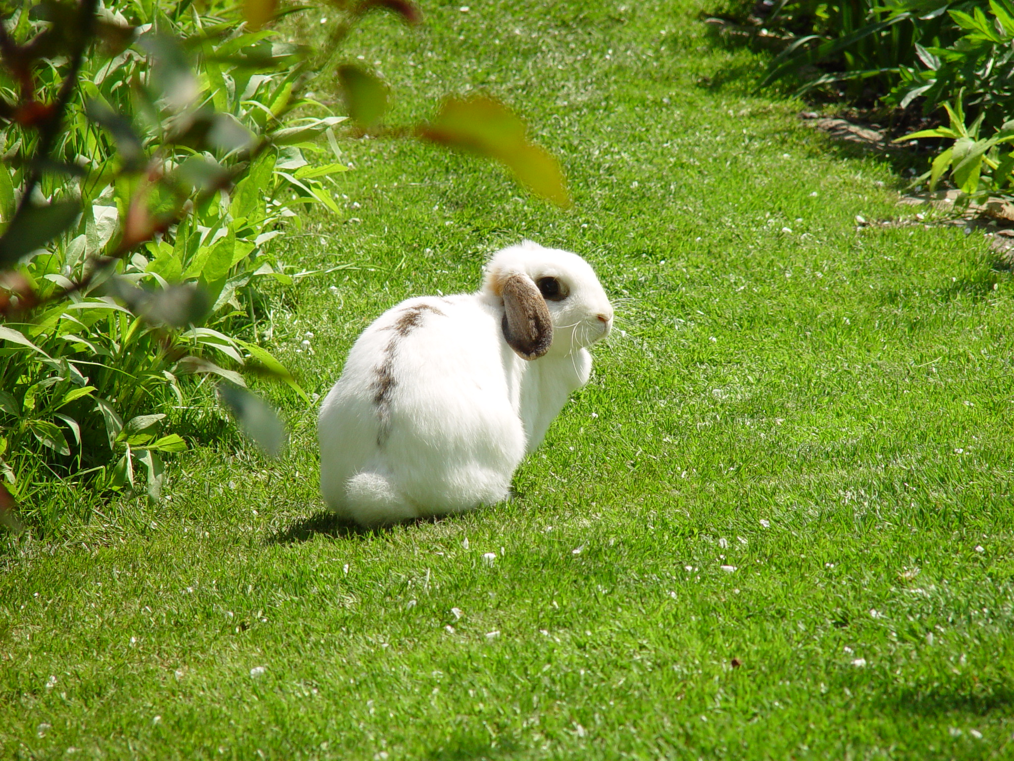 Adventurous Bunnies Explore the Lawn and Tall Grasses 1