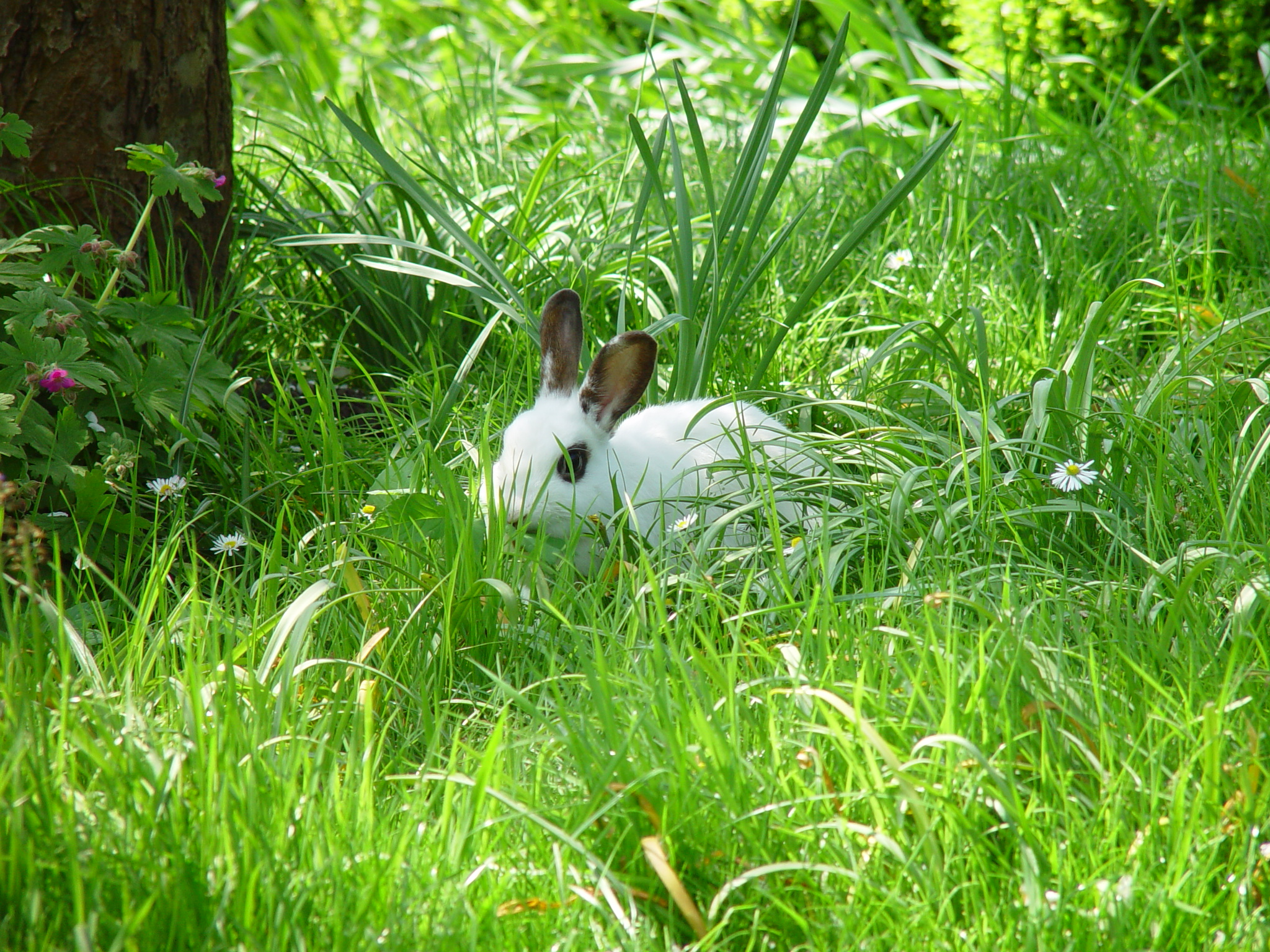Adventurous Bunnies Explore the Lawn and Tall Grasses 4
