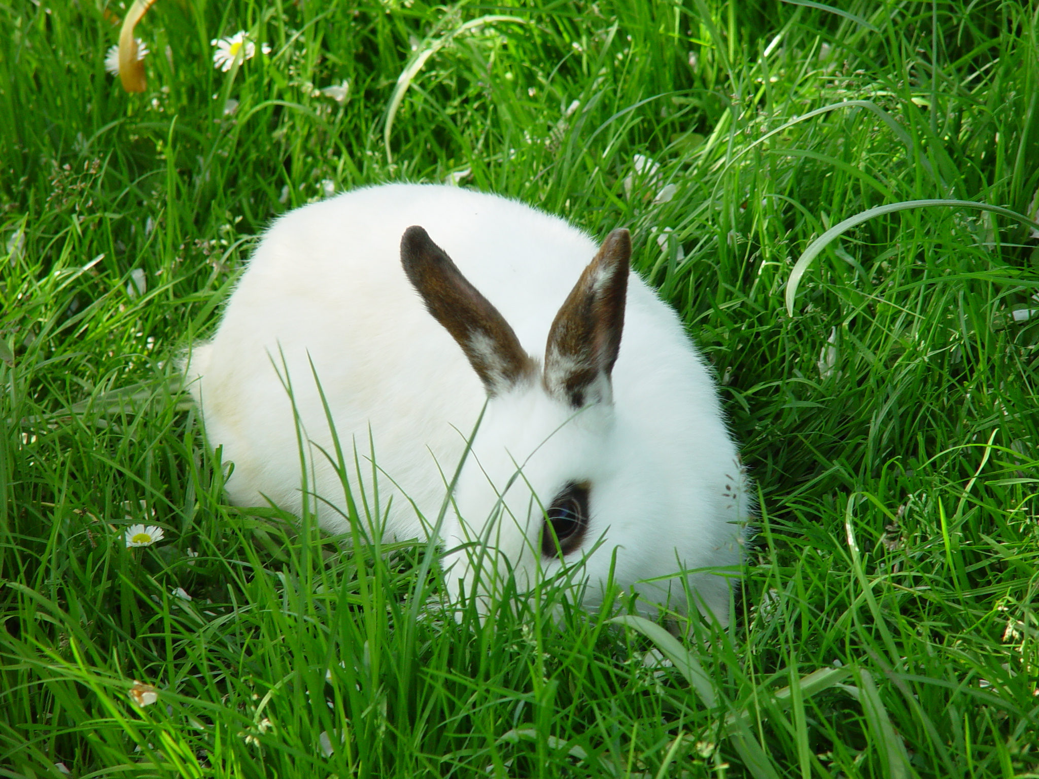 Adventurous Bunnies Explore the Lawn and Tall Grasses 3