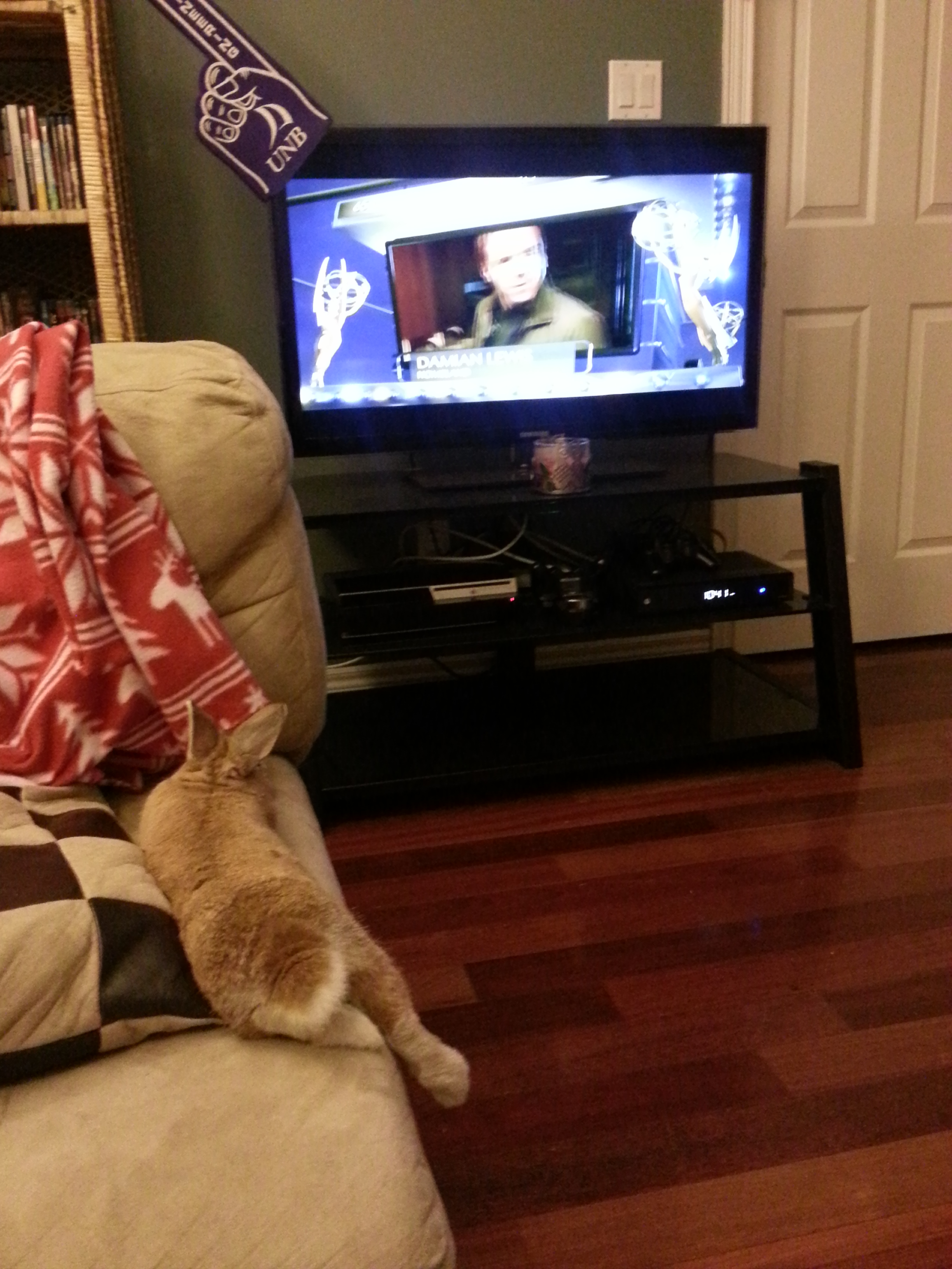 Bunny Relaxes and Watches a Little Television 1