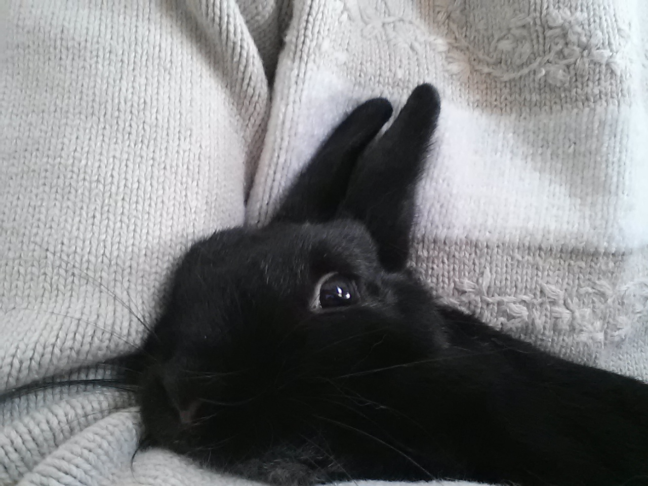 Bunny Snuggles Up in Her Human's Arms