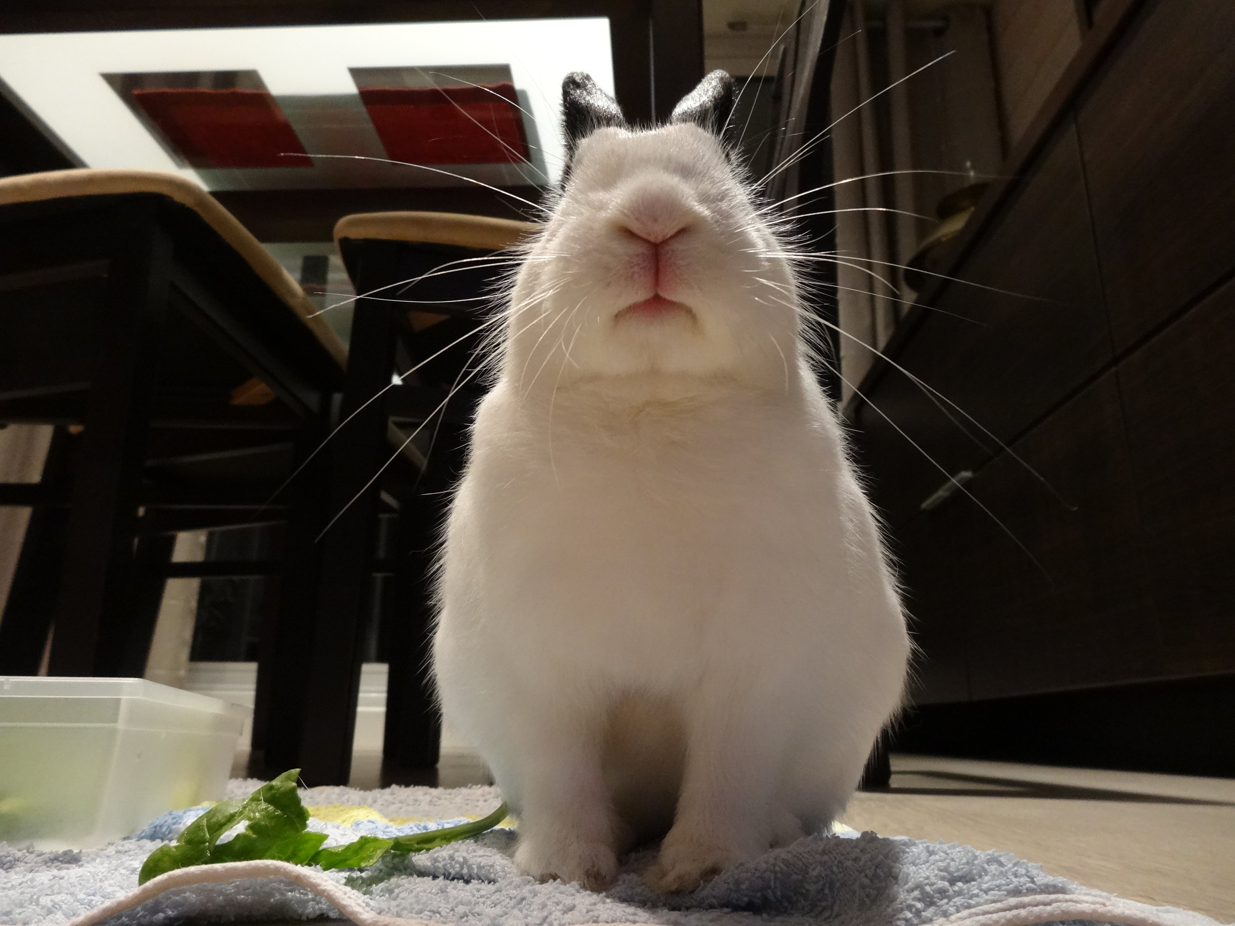 Bunny Disapproves of These Sparse Offerings