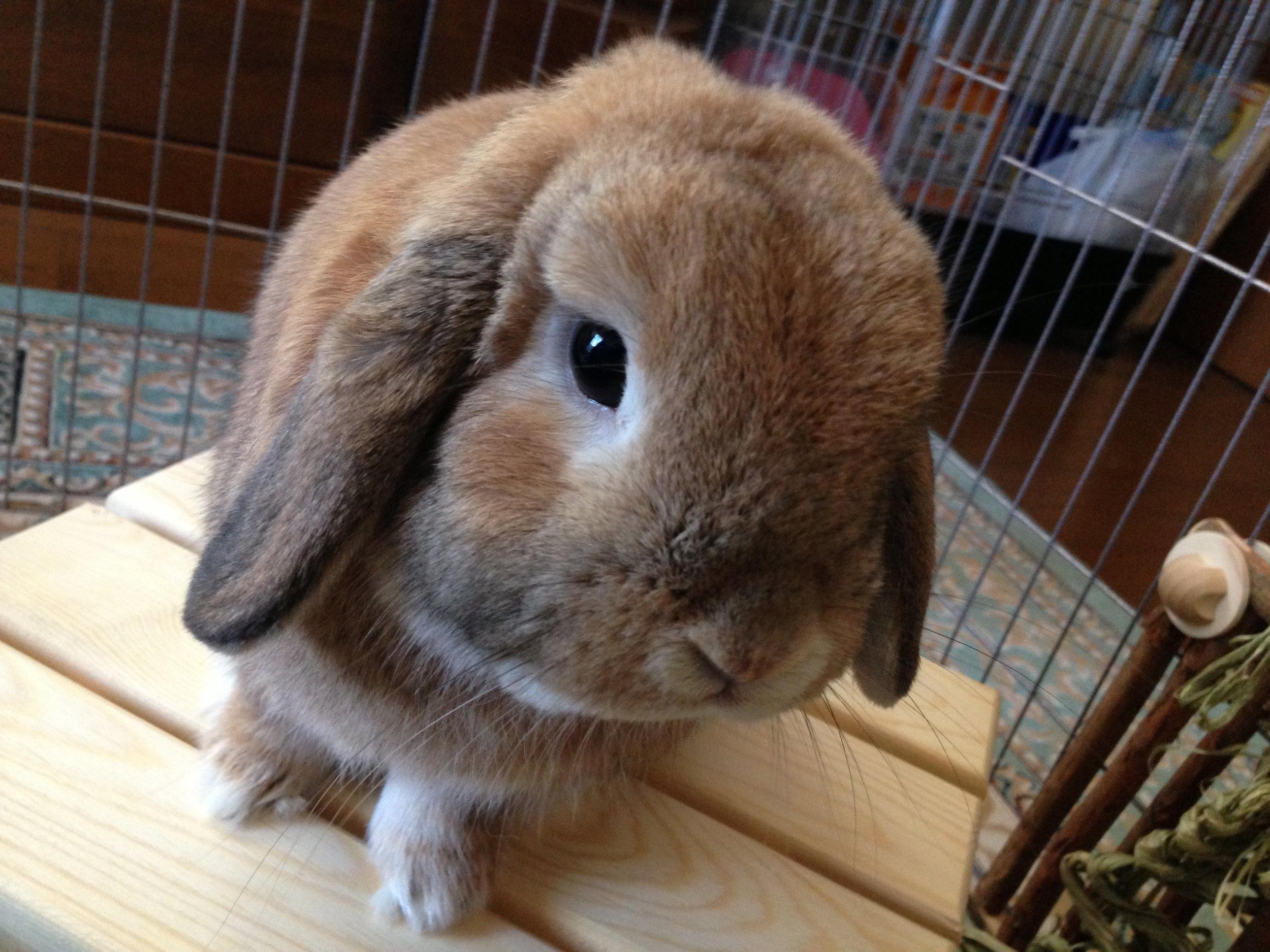 Bunny Face, Bunny Bum 1