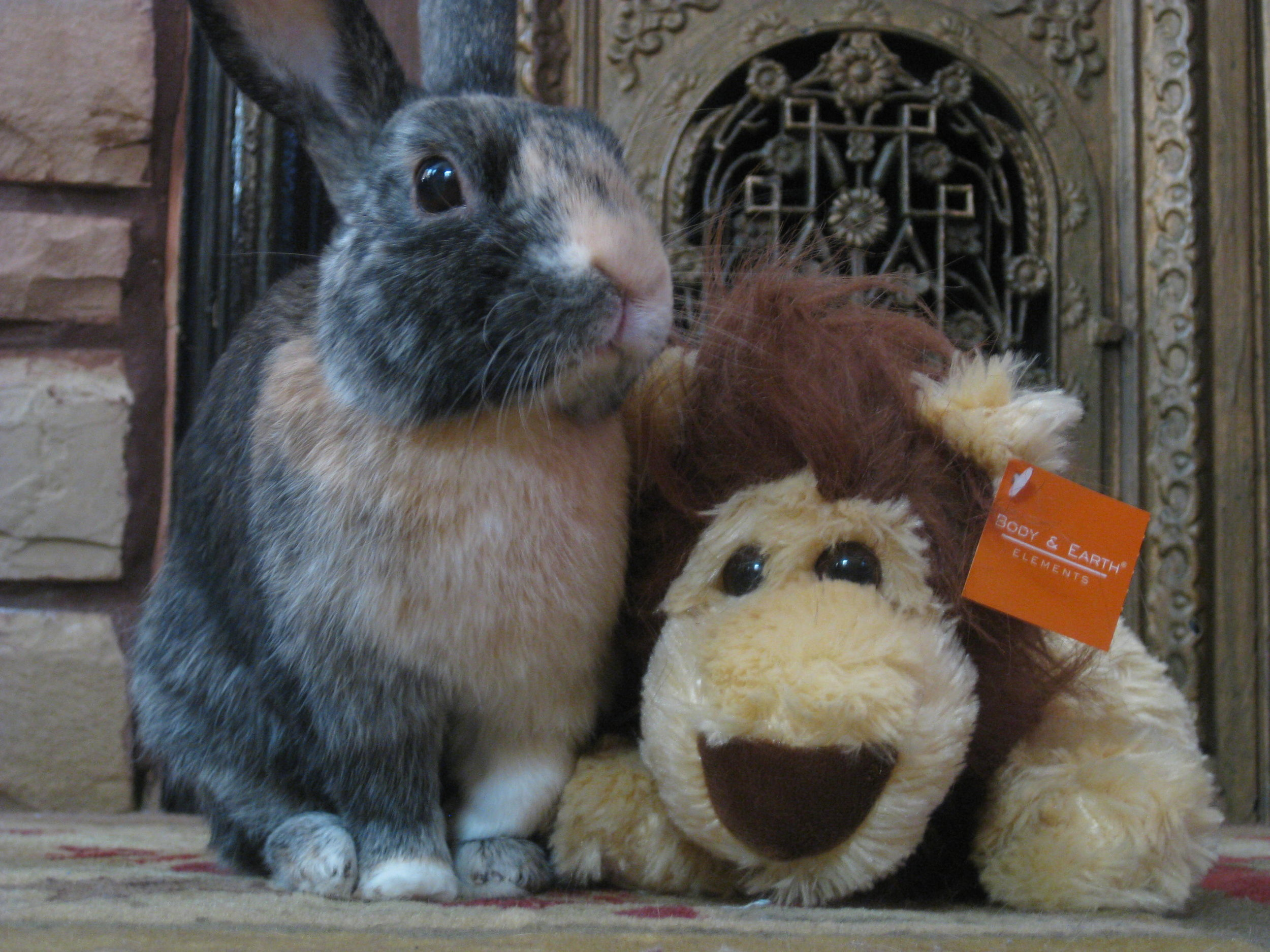 Bunny and His Lion Friend Welcome You to Their Humble Abode 1