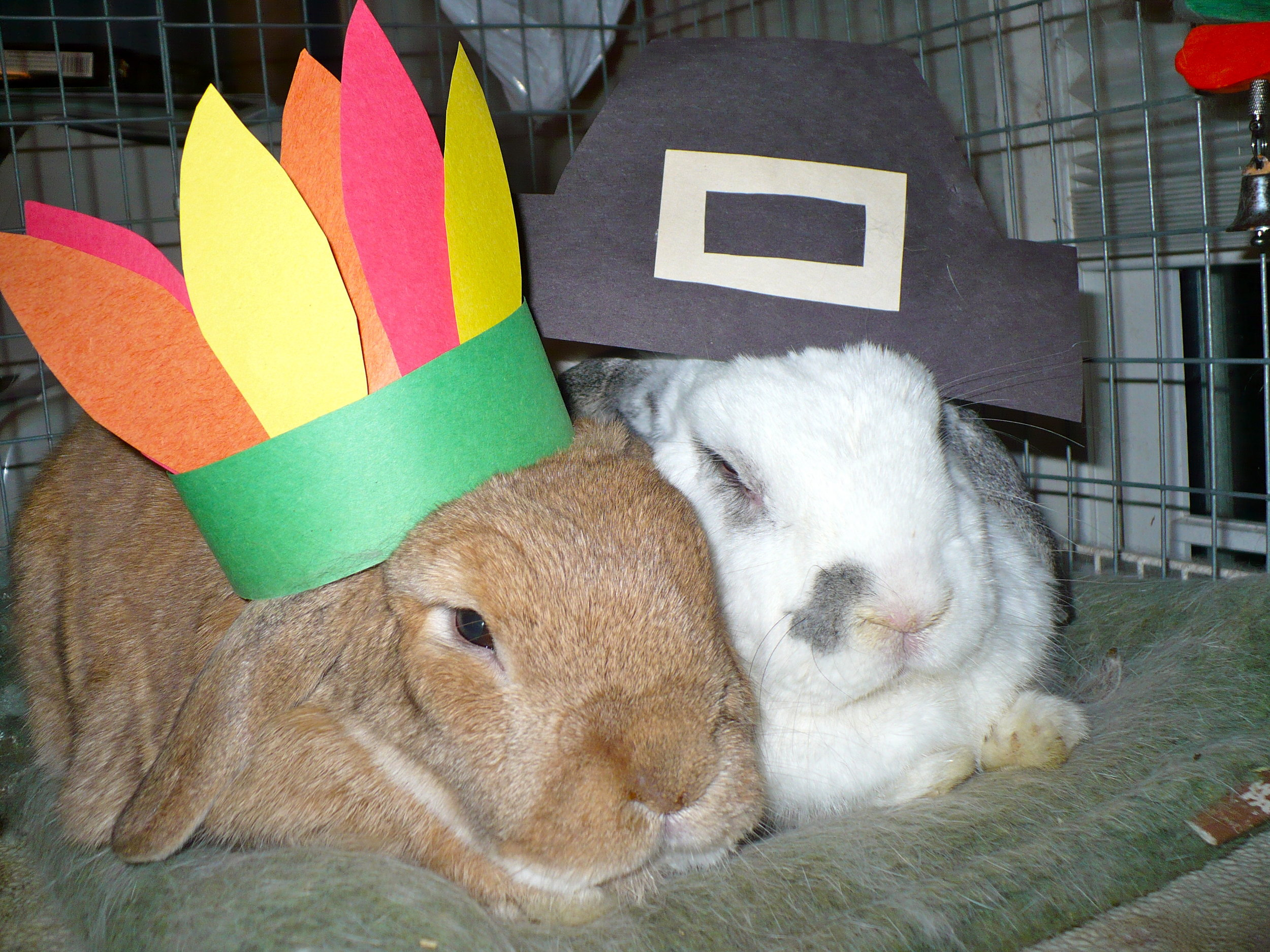 Bunnies Wear Their Thanksgiving Hats for the Holiday