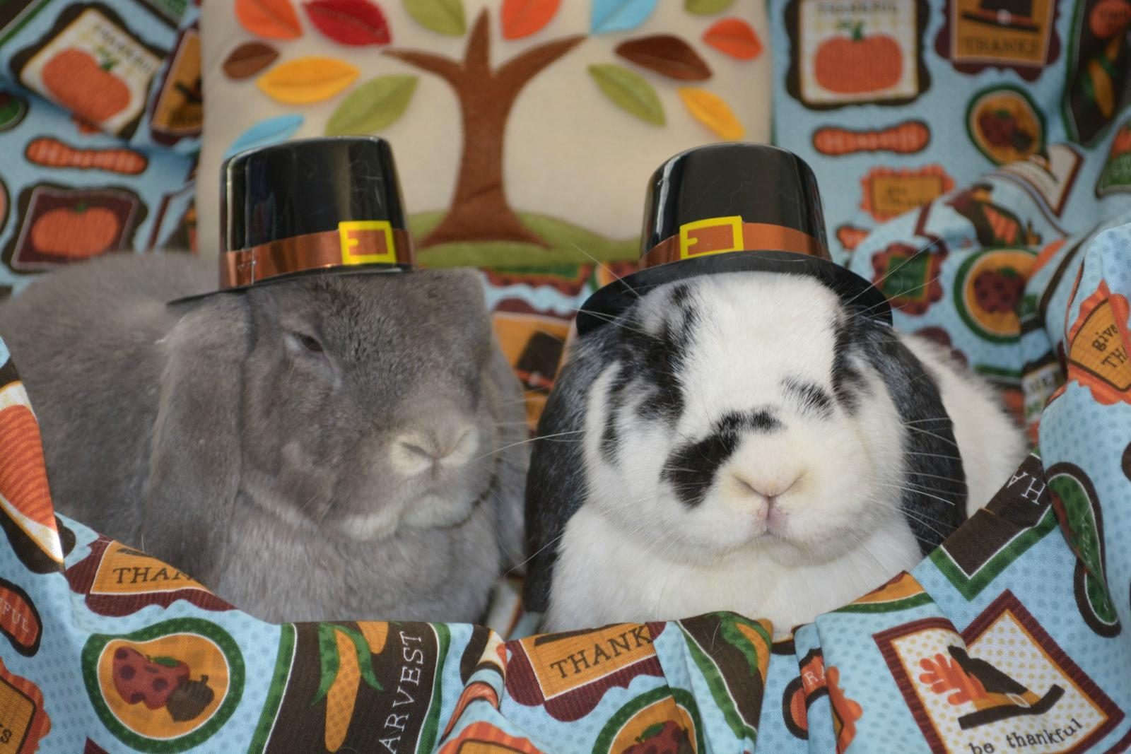 More Bunnies in Thanksgiving Hats!