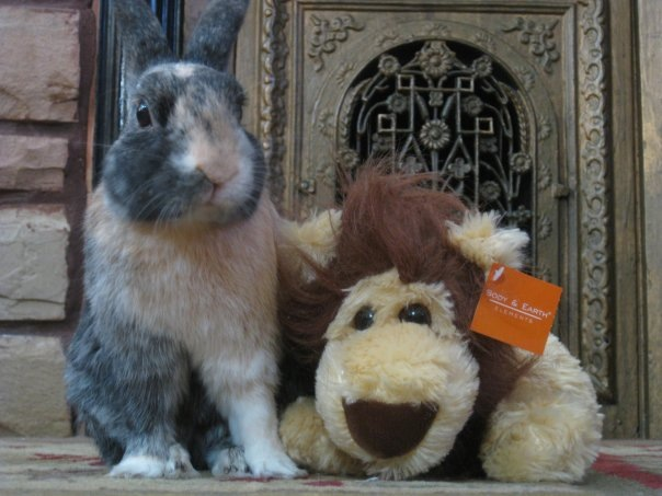 Bunny and His Lion Friend Welcome You to Their Humble Abode 2