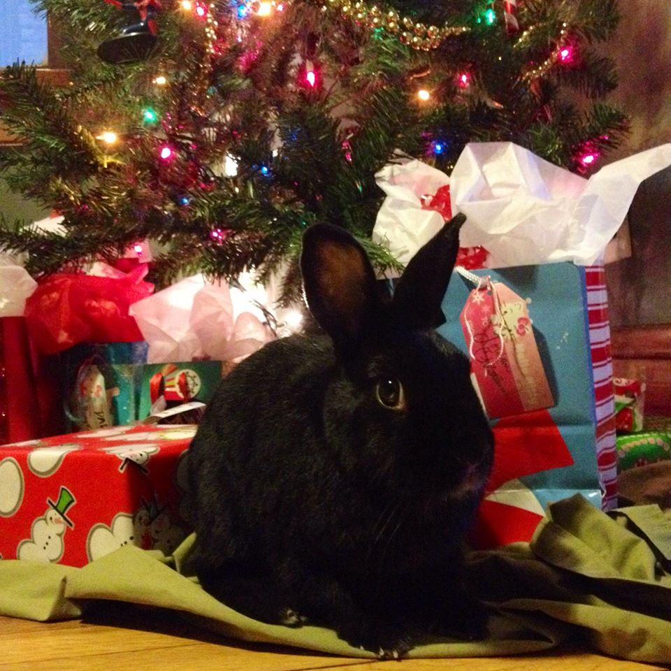 Bunny Waits for His Human to Look Away Before Getting Into the Presents