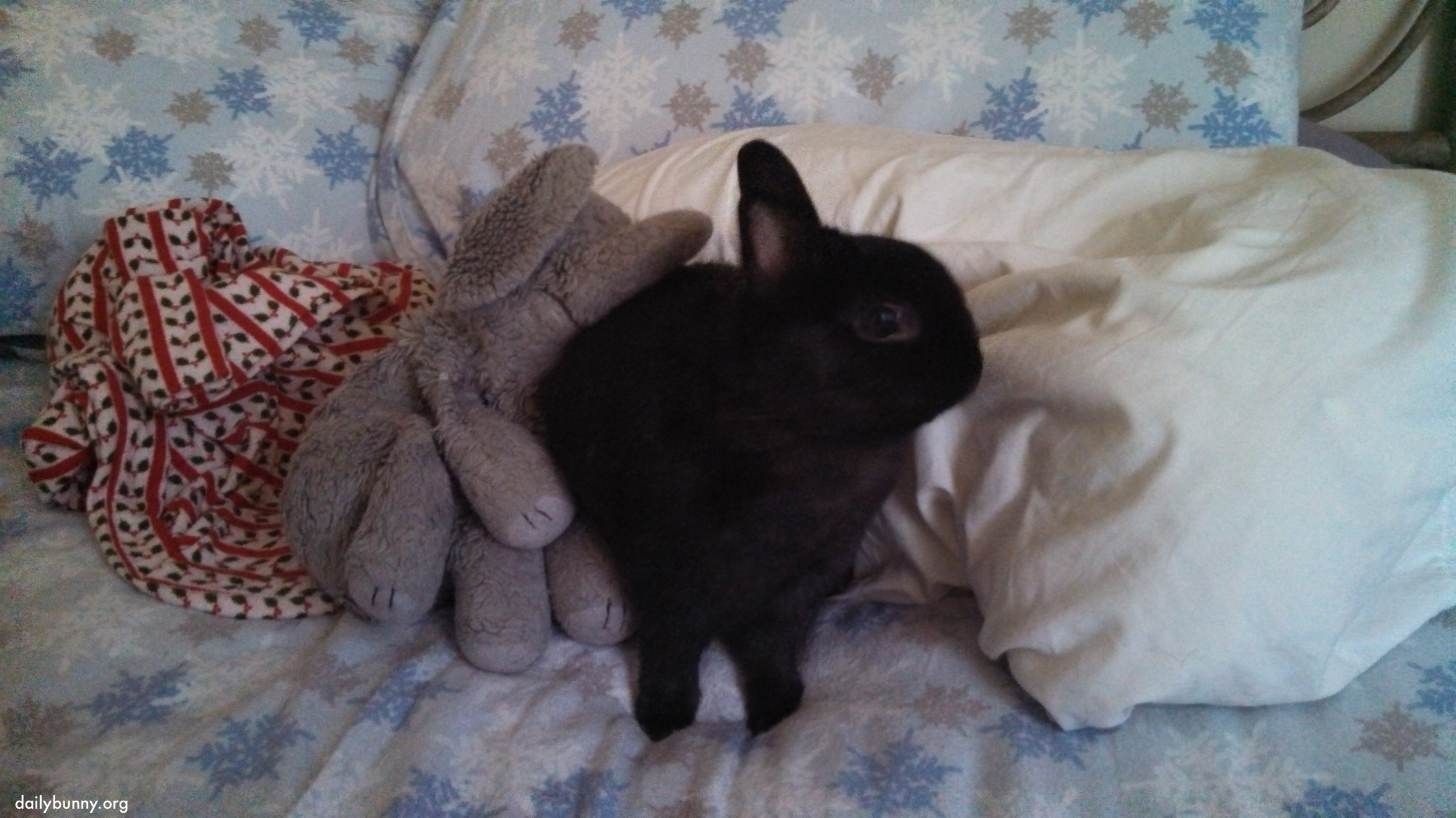 Bunny's Elephant Friend Wants to Keep Cuddling
