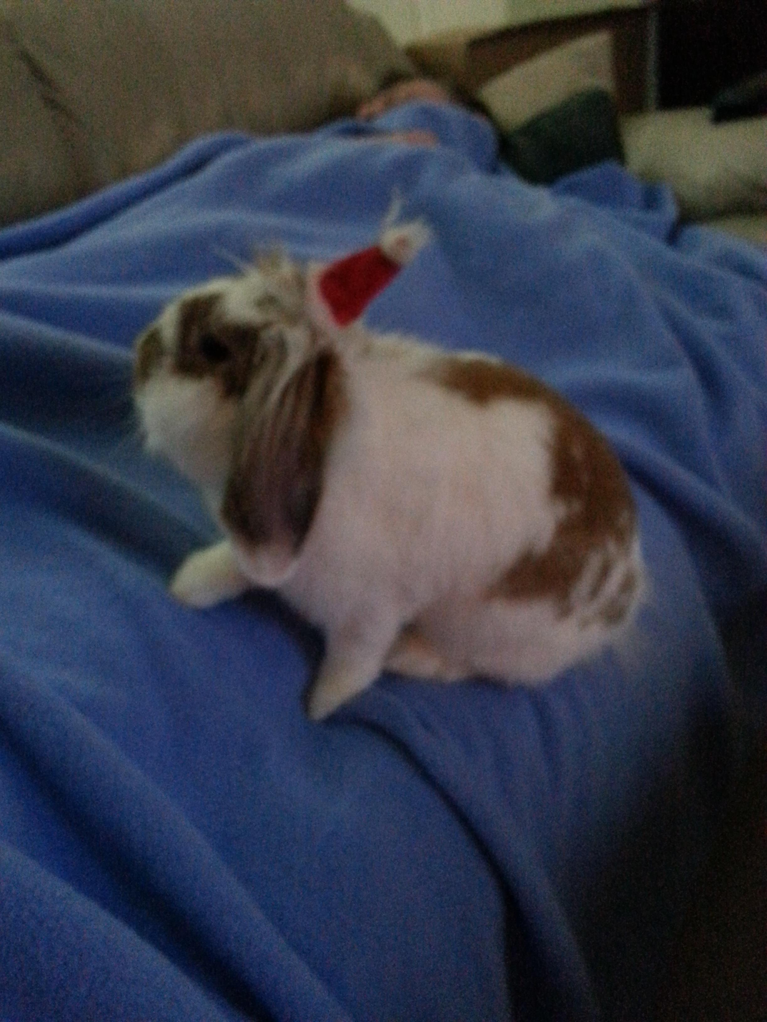 The Daily Bunny's Christmas 2013 Mega-Post 19.3