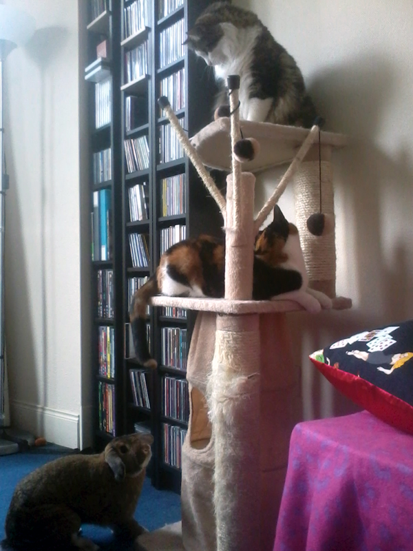 Bunny Wants to Climb Up There with Her Kitty Friends